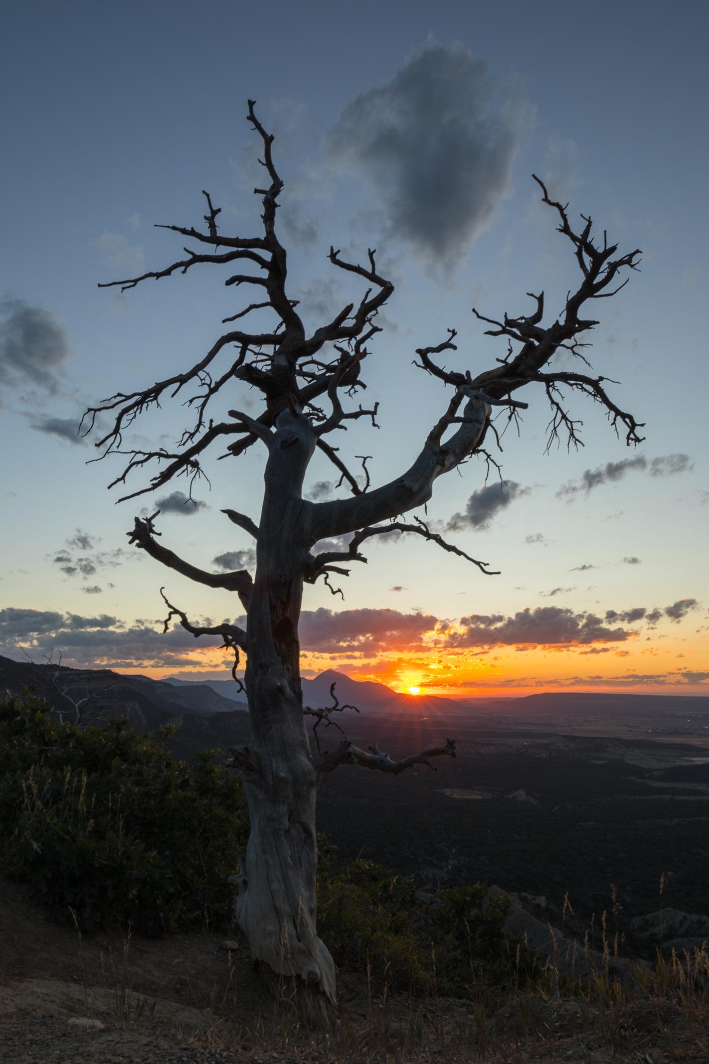 Verde National Park, Image #0240
