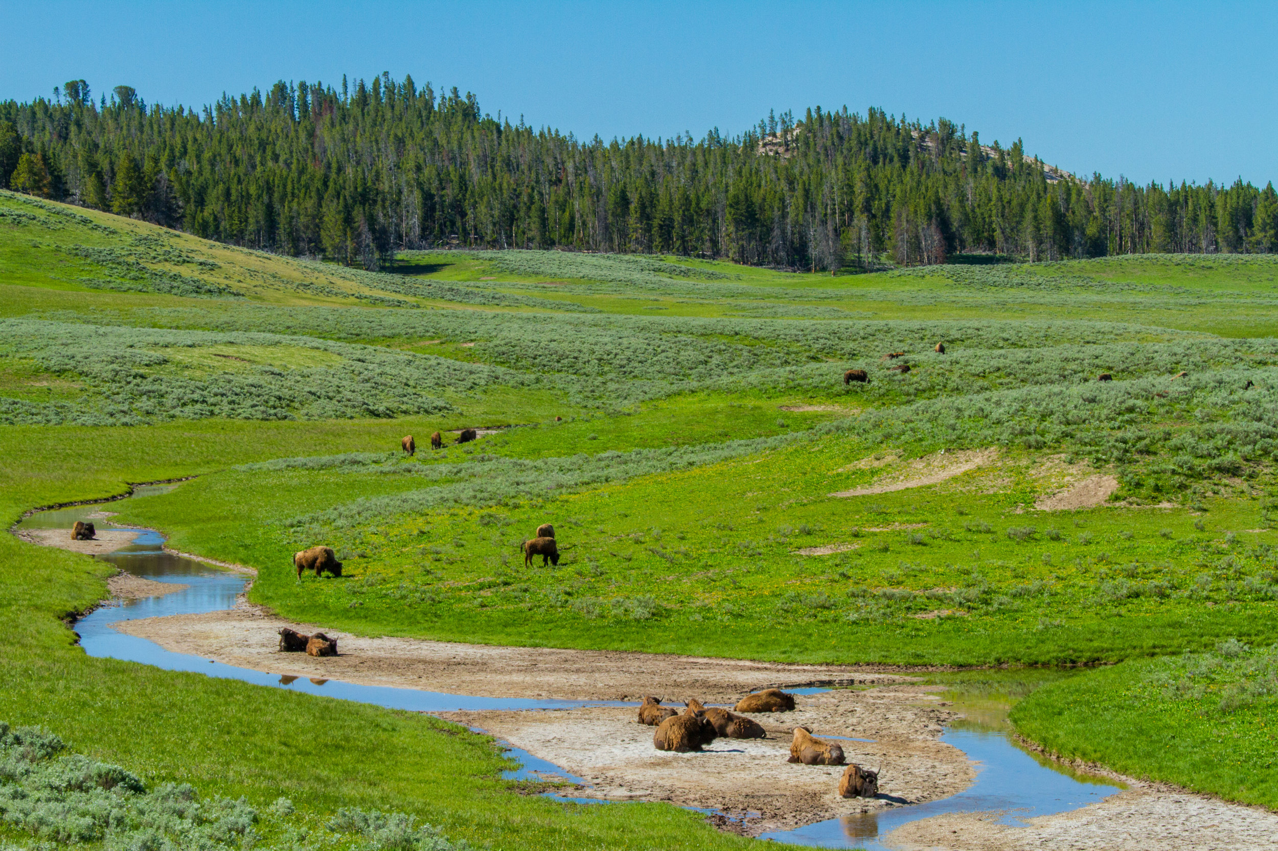 Hayden Valley, Yellowstone National Park, Image # 5202