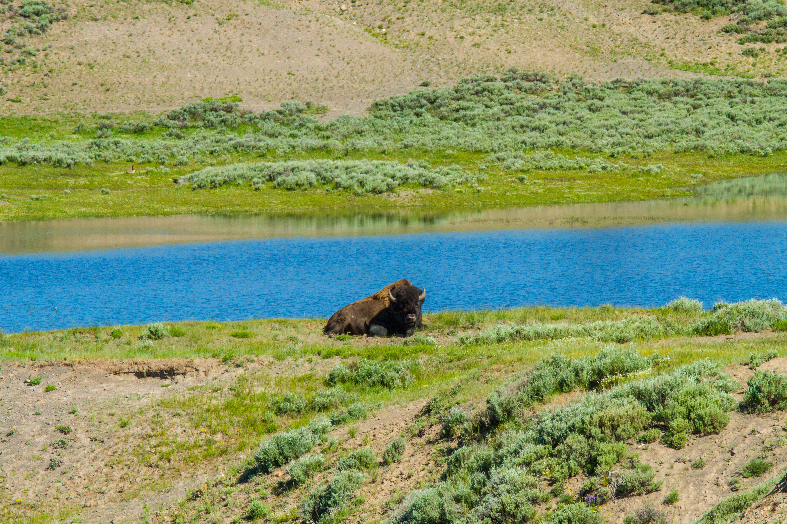 Hayden Valley, Yellowstone National Park, Image # 5209