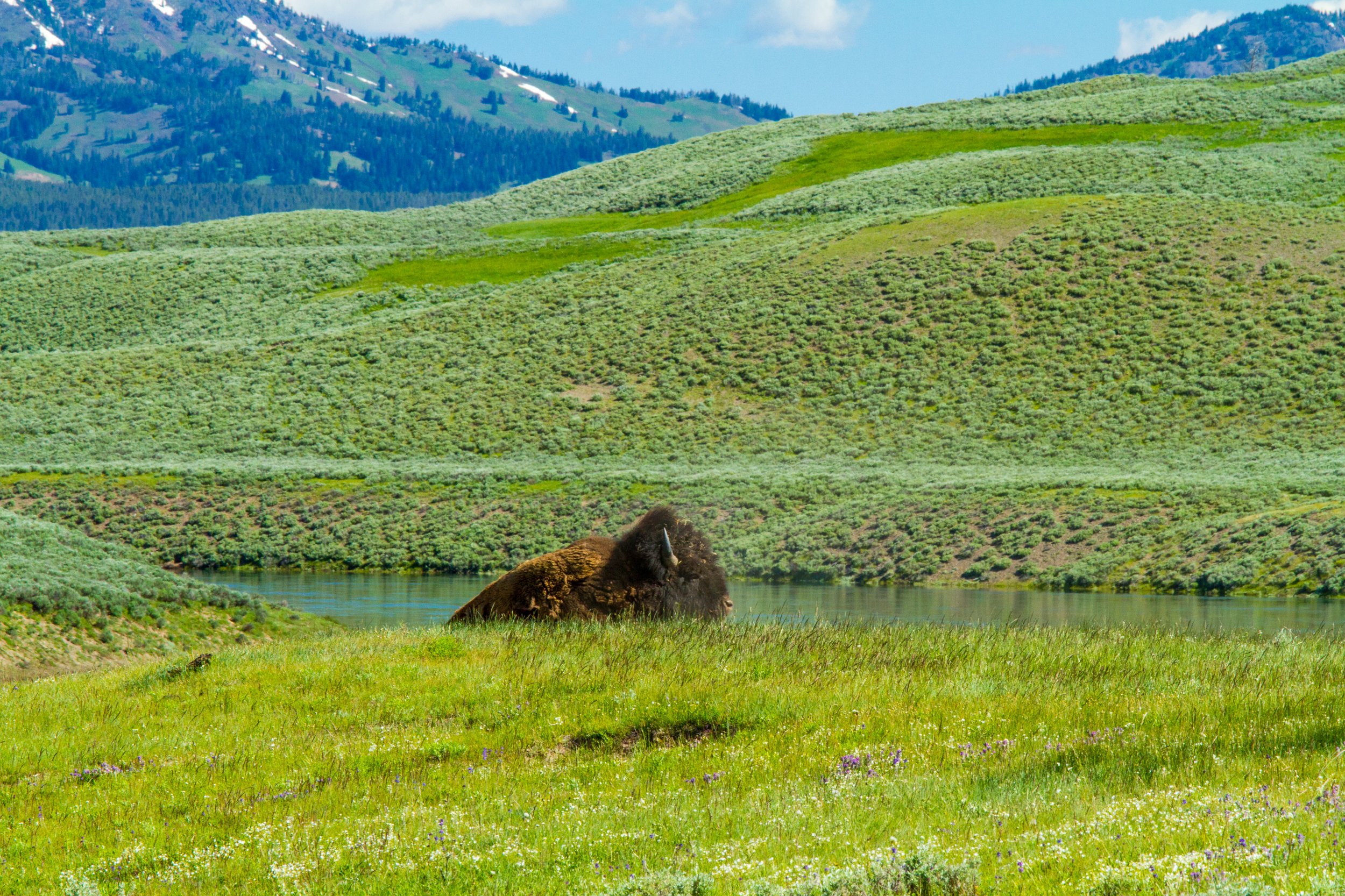 Hayden Valley, Yellowstone National Park, Image # 5211