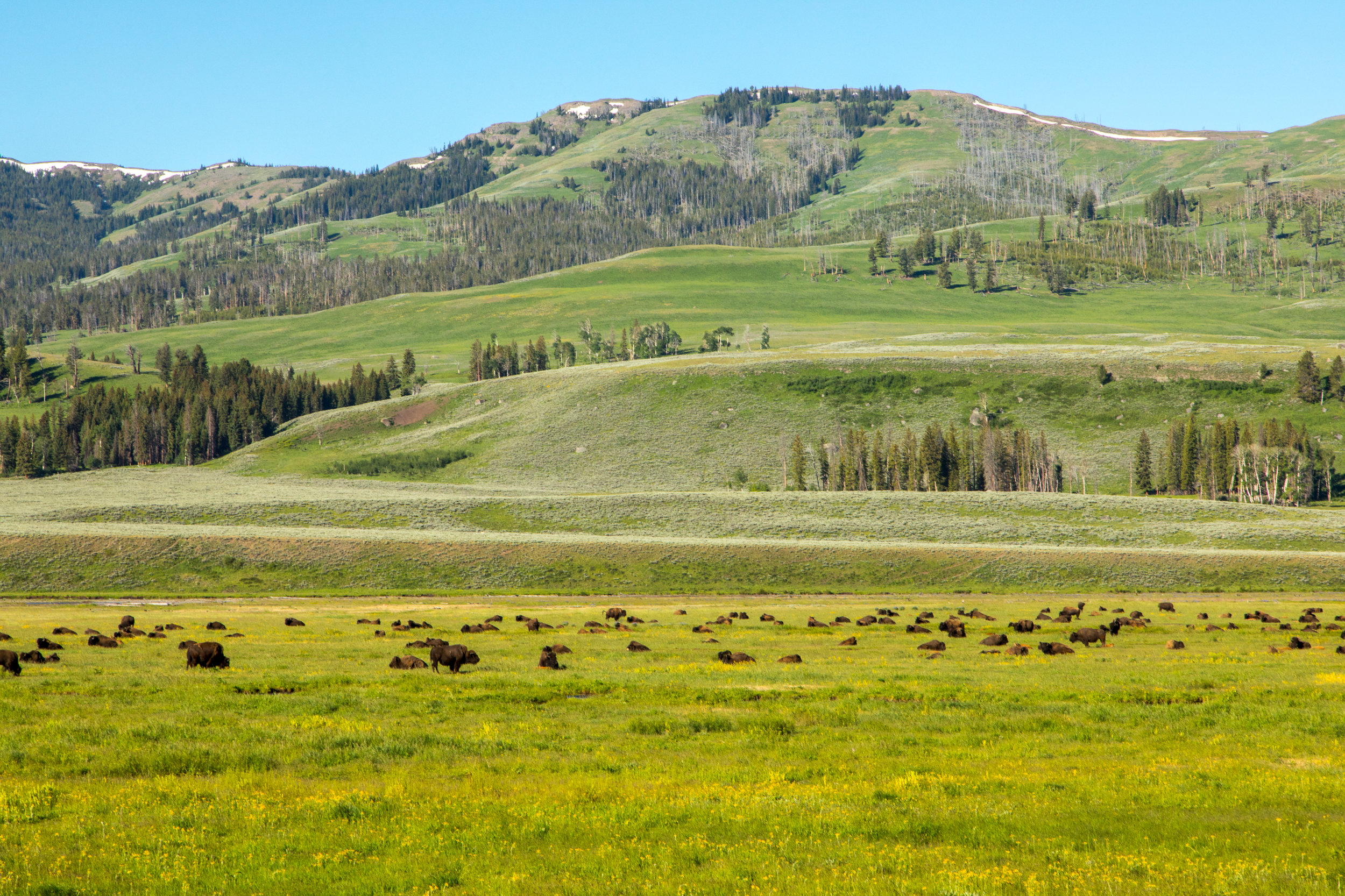 Lamar Valley, Yellowstone National Park, Image # 6909