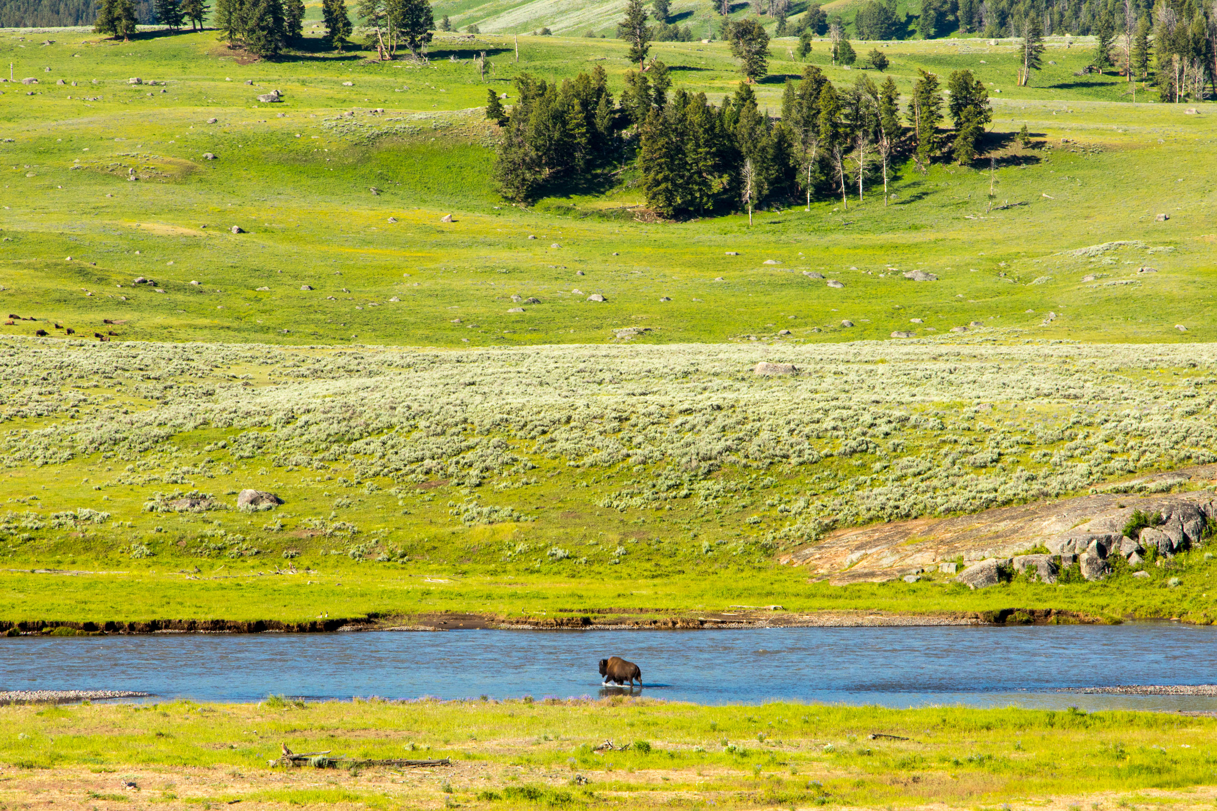 Lamar Valley, Yellowstone National Park, Image # 6914