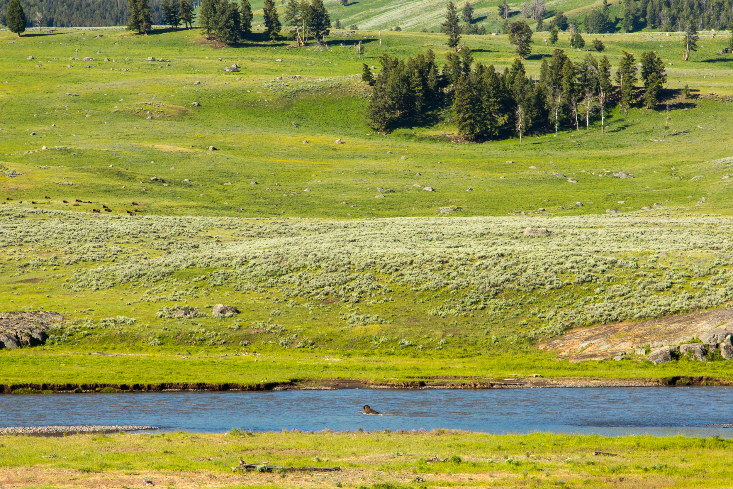 Lamar Valley, Yellowstone National Park, Image # 6015