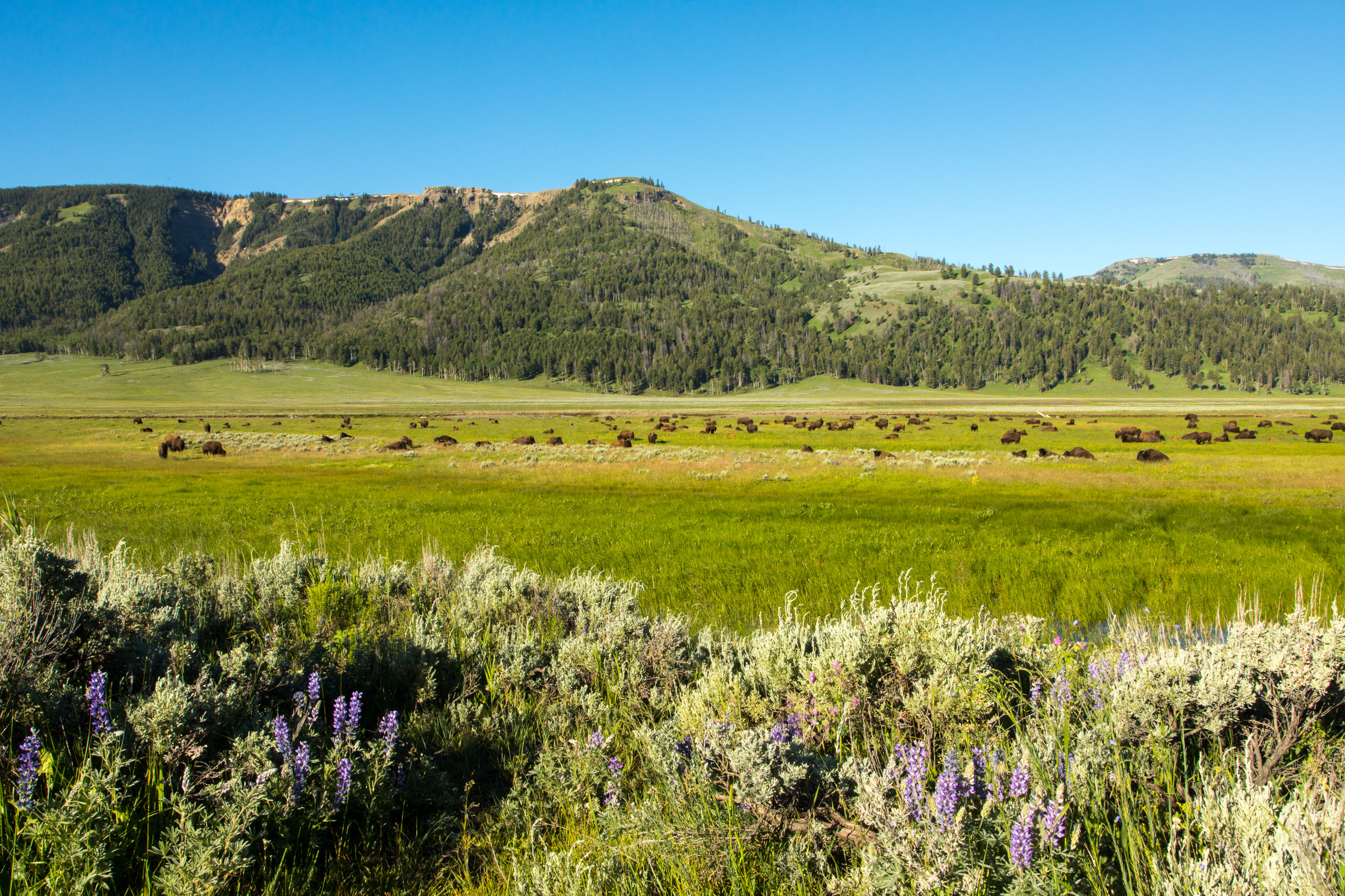 Lamar Valley, Yellowstone National Park, Image # 7609