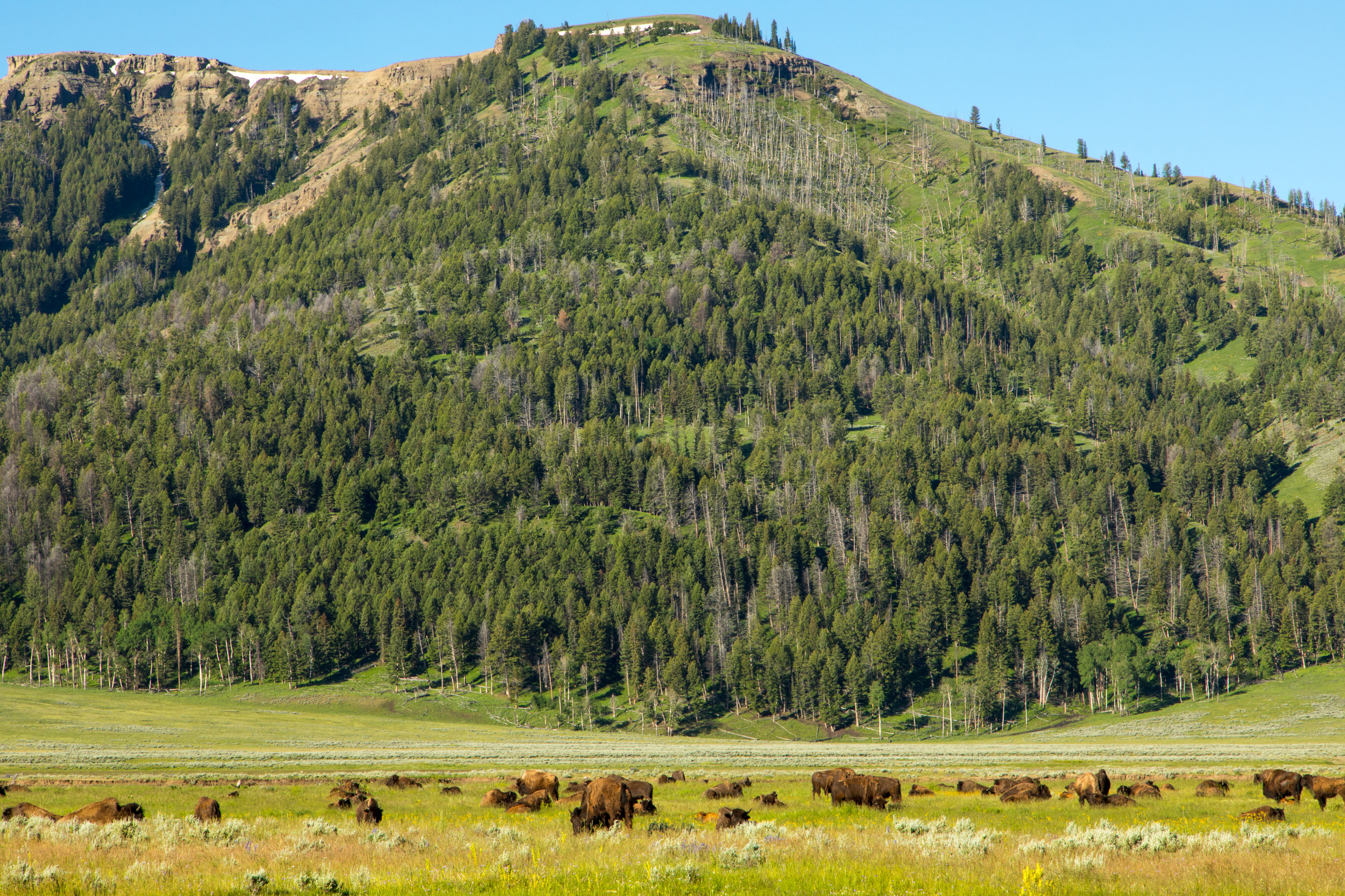 Lamar Valley, Yellowstone National Park, Image # 7620