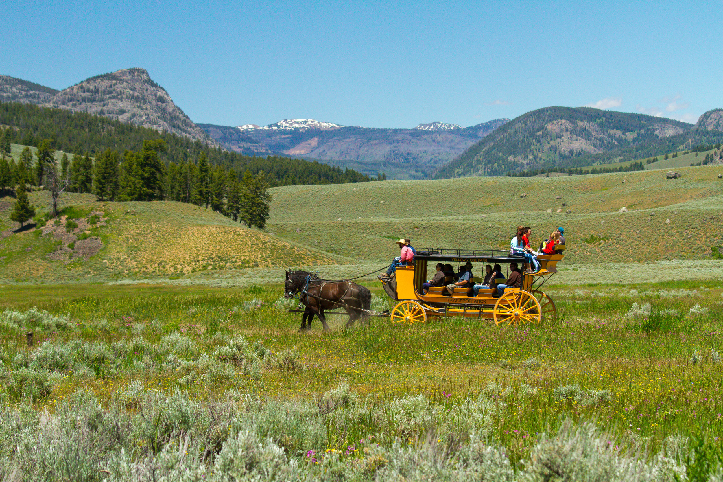 Lamar Valley, Yellowstone National Park, Image # 5087