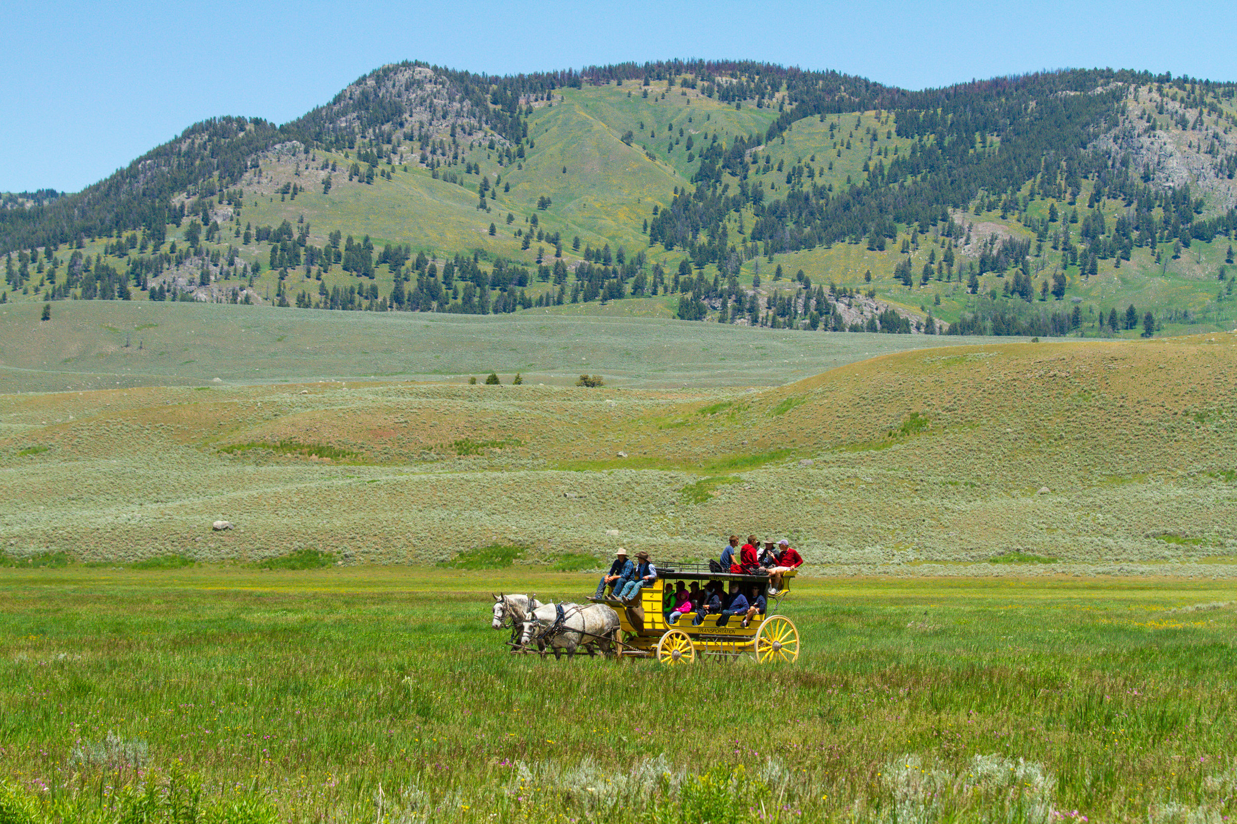 Lamar Valley, Yellowstone National Park, Image # 5093