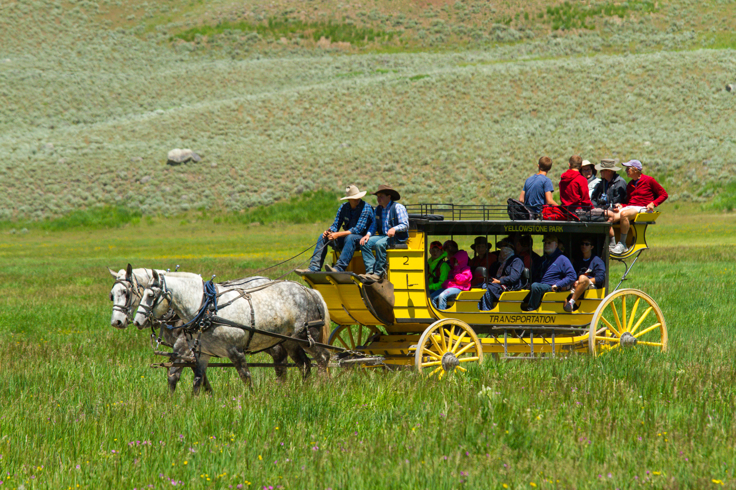 Lamar Valley, Yellowstone National Park, Image # 5095