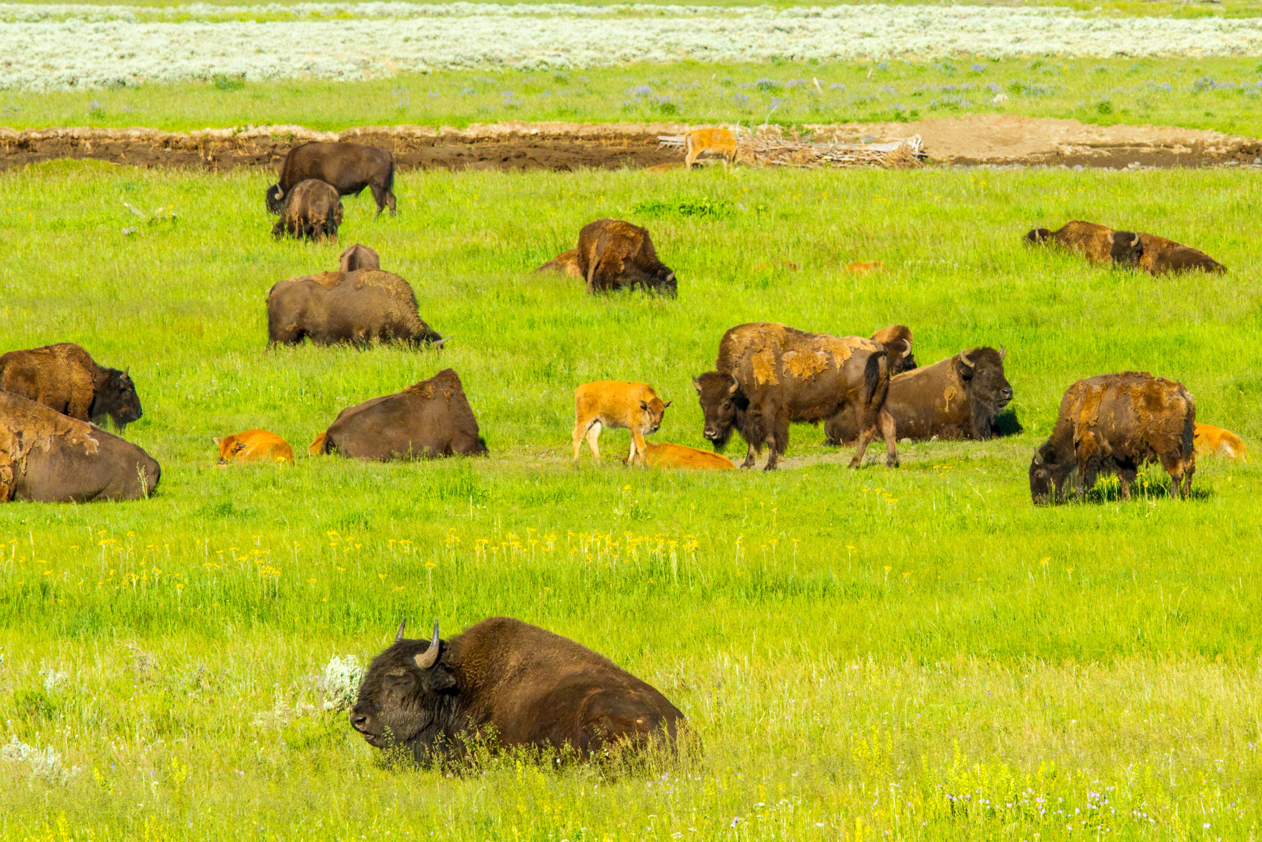 Lamar Valley, Yellowstone National Park, Image # 5116
