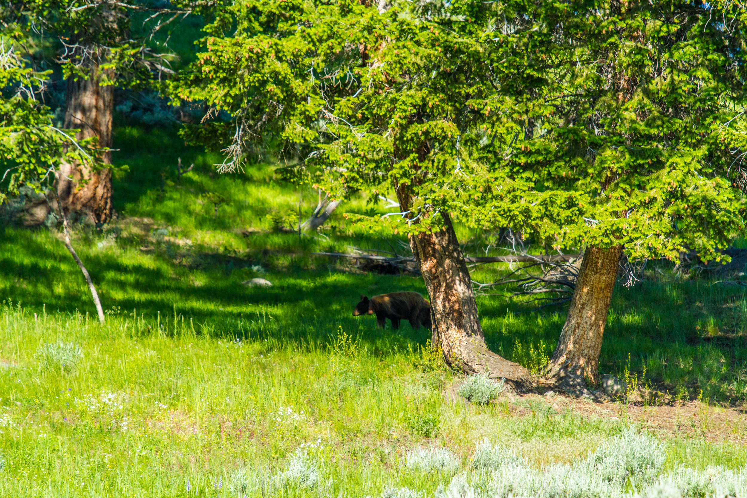 Lamar Valley, Yellowstone National Park, Image # 5146