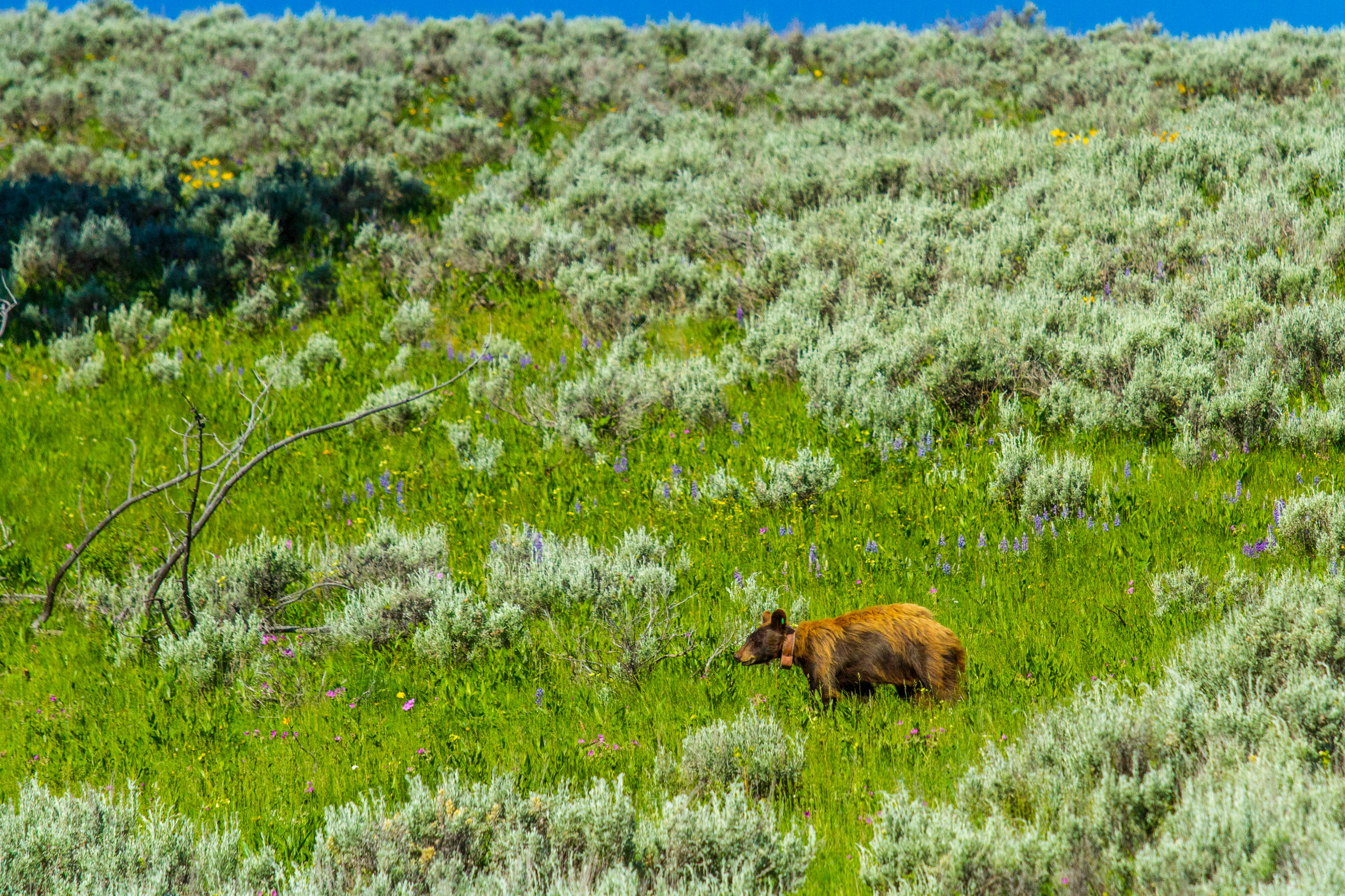 Lamar Valley, Yellowstone National Park, Image # 5174