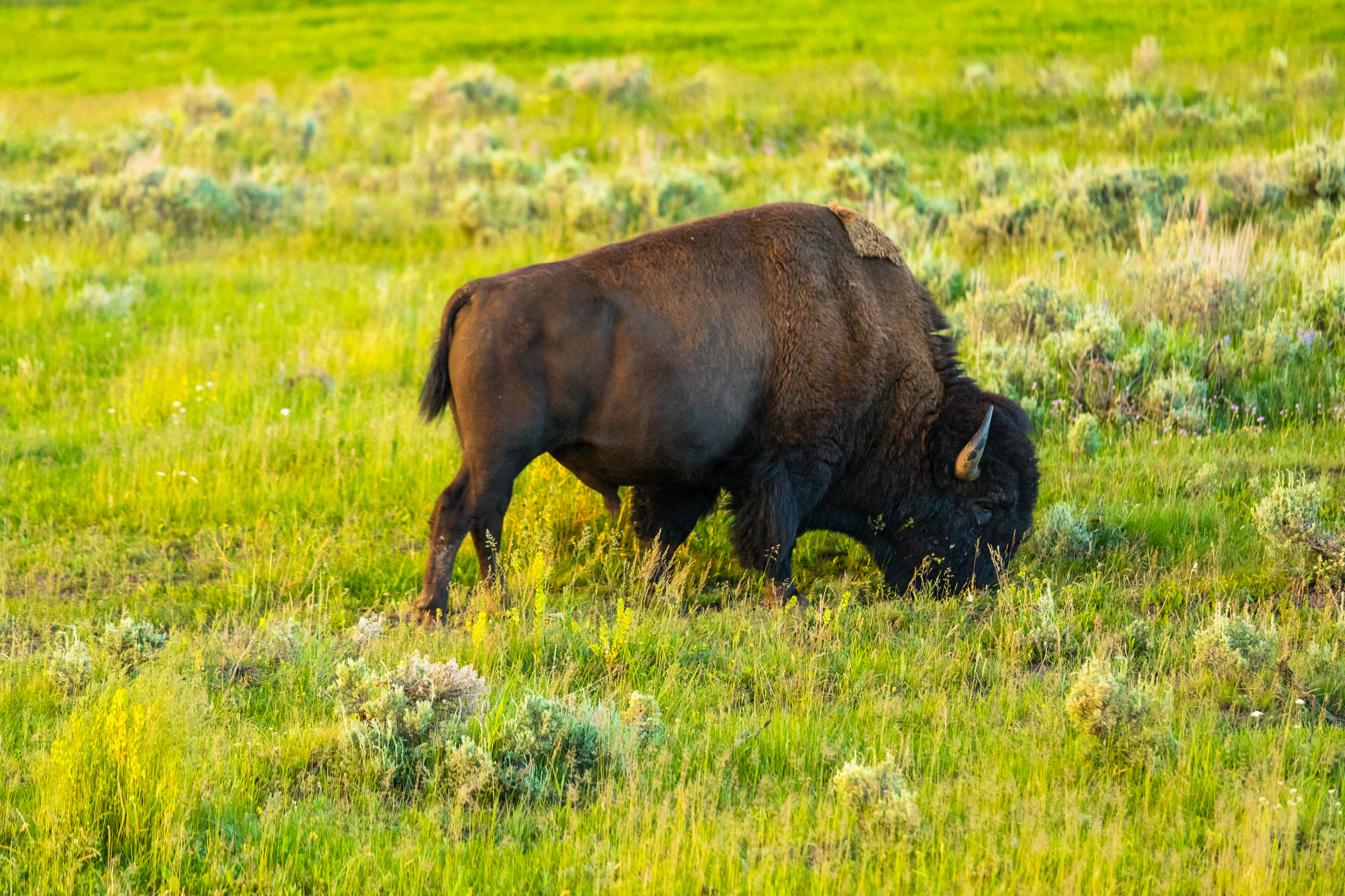 Lamar Valley, Yellowstone National Park, Image # 6045