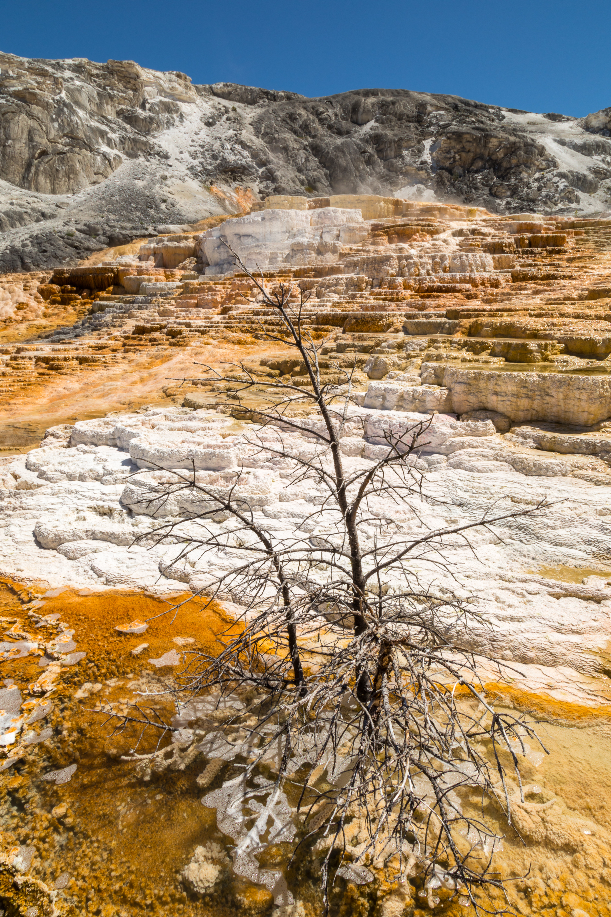 Mammoth Hot Springs, Yellowstone National Park, Image # 7313