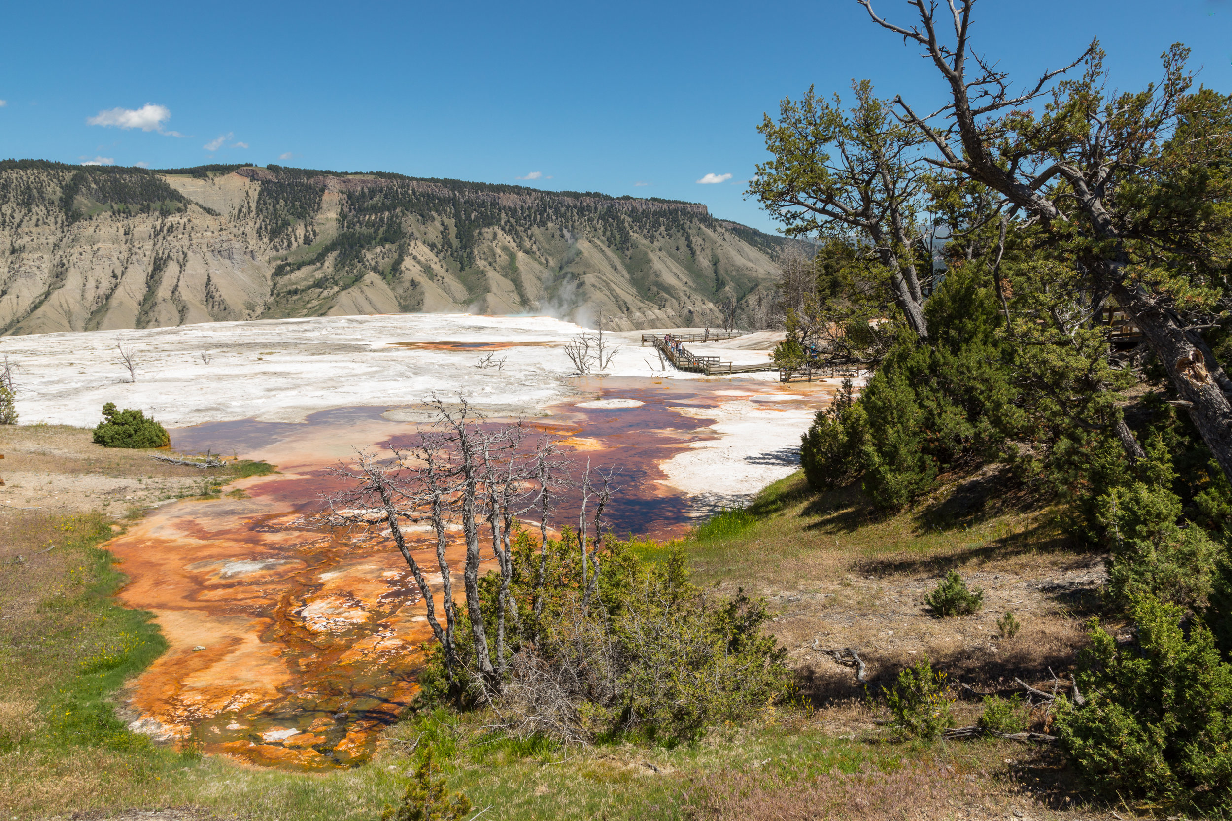 Mammoth Hot Springs, Yellowstone National Park, Image # 7326
