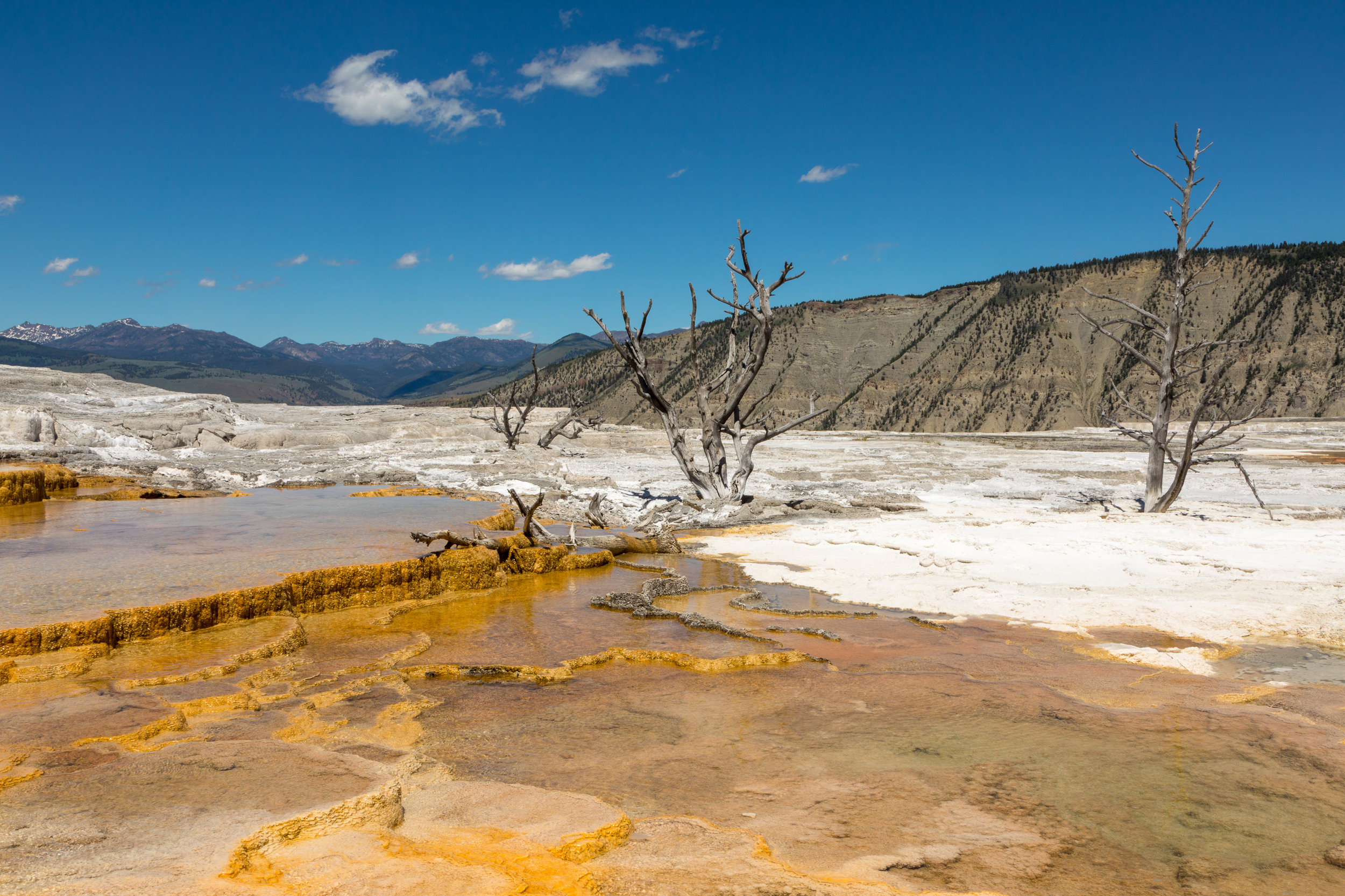 Mammoth Hot Springs, Yellowstone National Park, Image # 7332