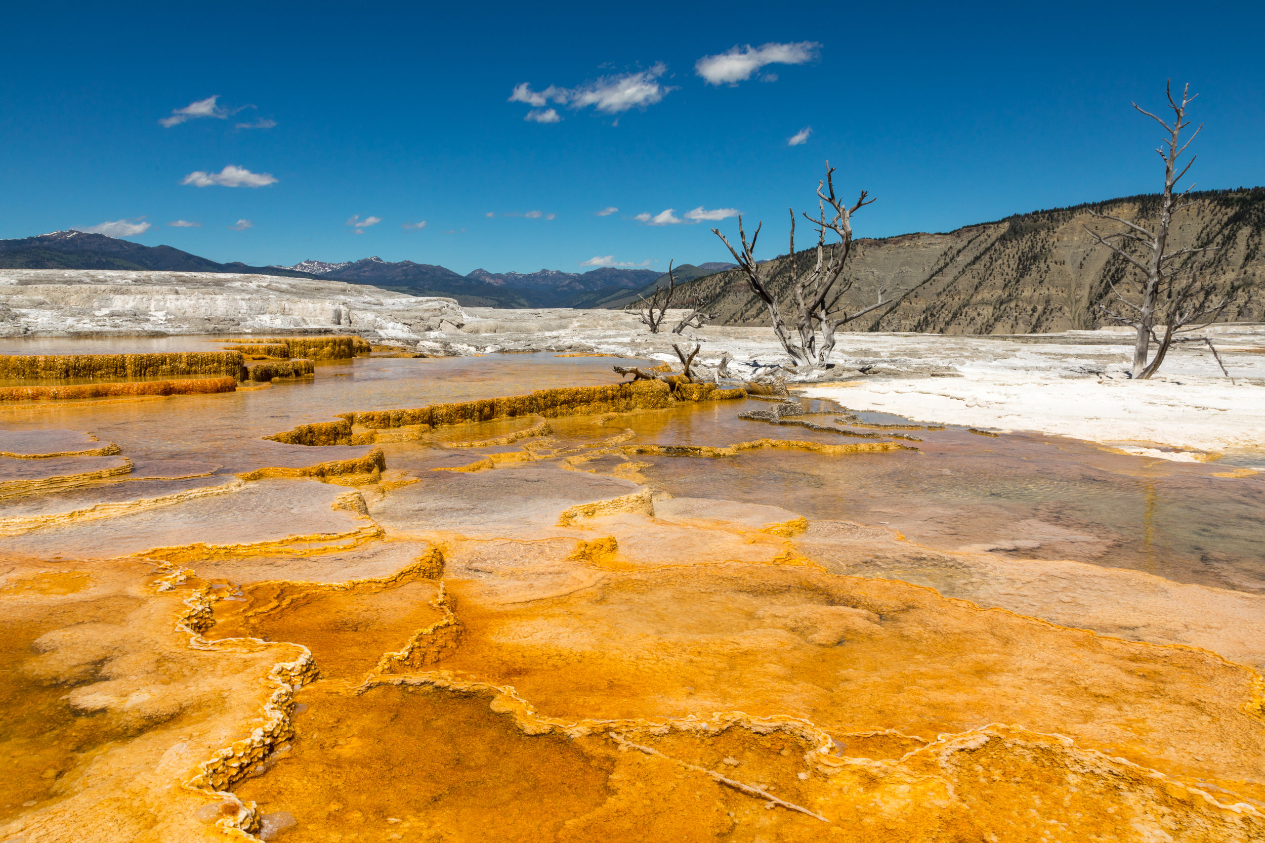 Mammoth Hot Springs, Yellowstone National Park, Image # 7356