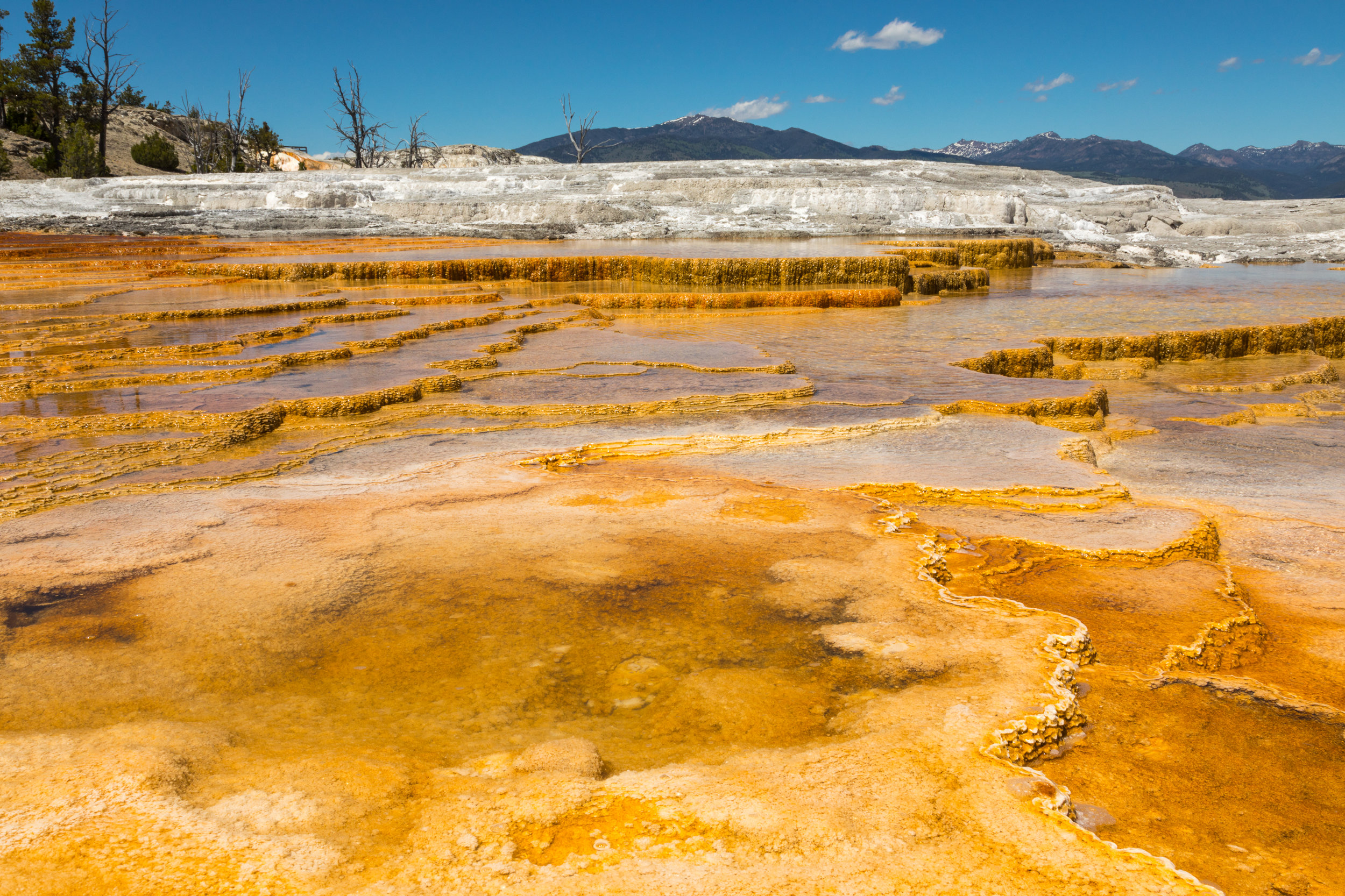 Mammoth Hot Springs, Yellowstone National Park, Image # 7362