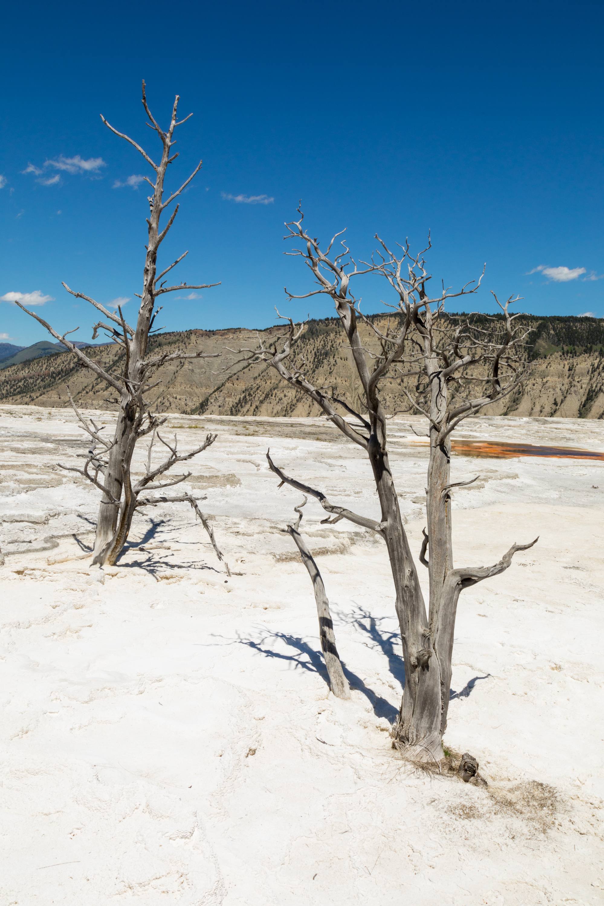 Mammoth Hot Springs, Yellowstone National Park, Image # 7384