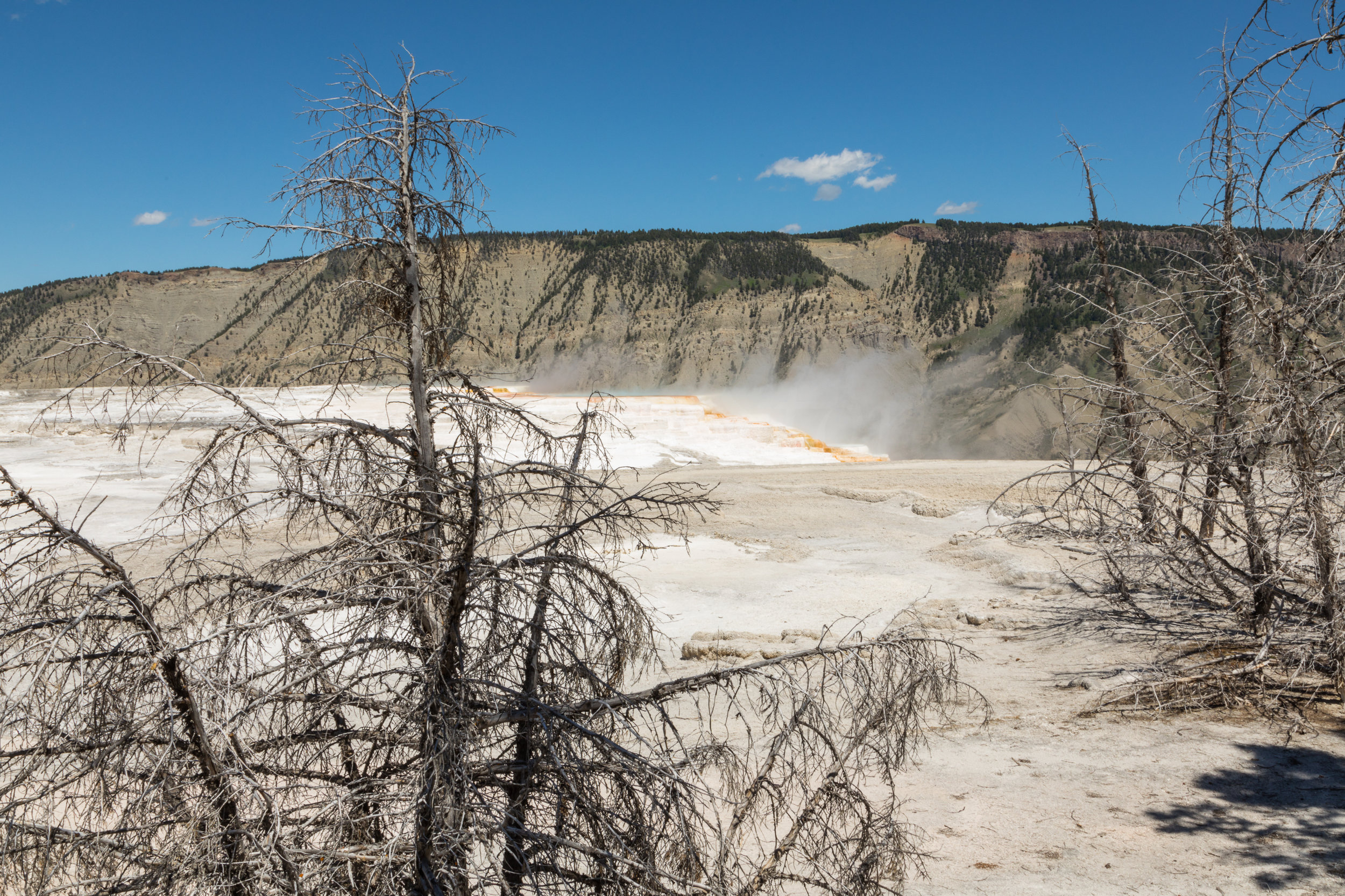 Mammoth Hot Springs, Yellowstone National Park, Image # 7397