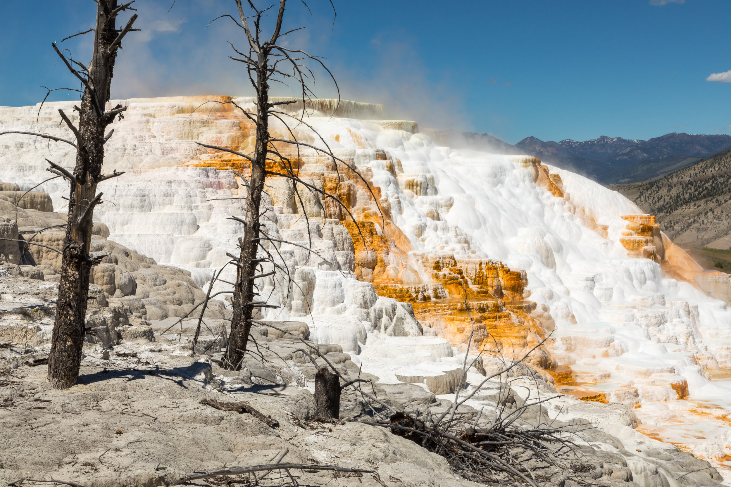 Mammoth Hot Springs, Yellowstone National Park, Image # 7442