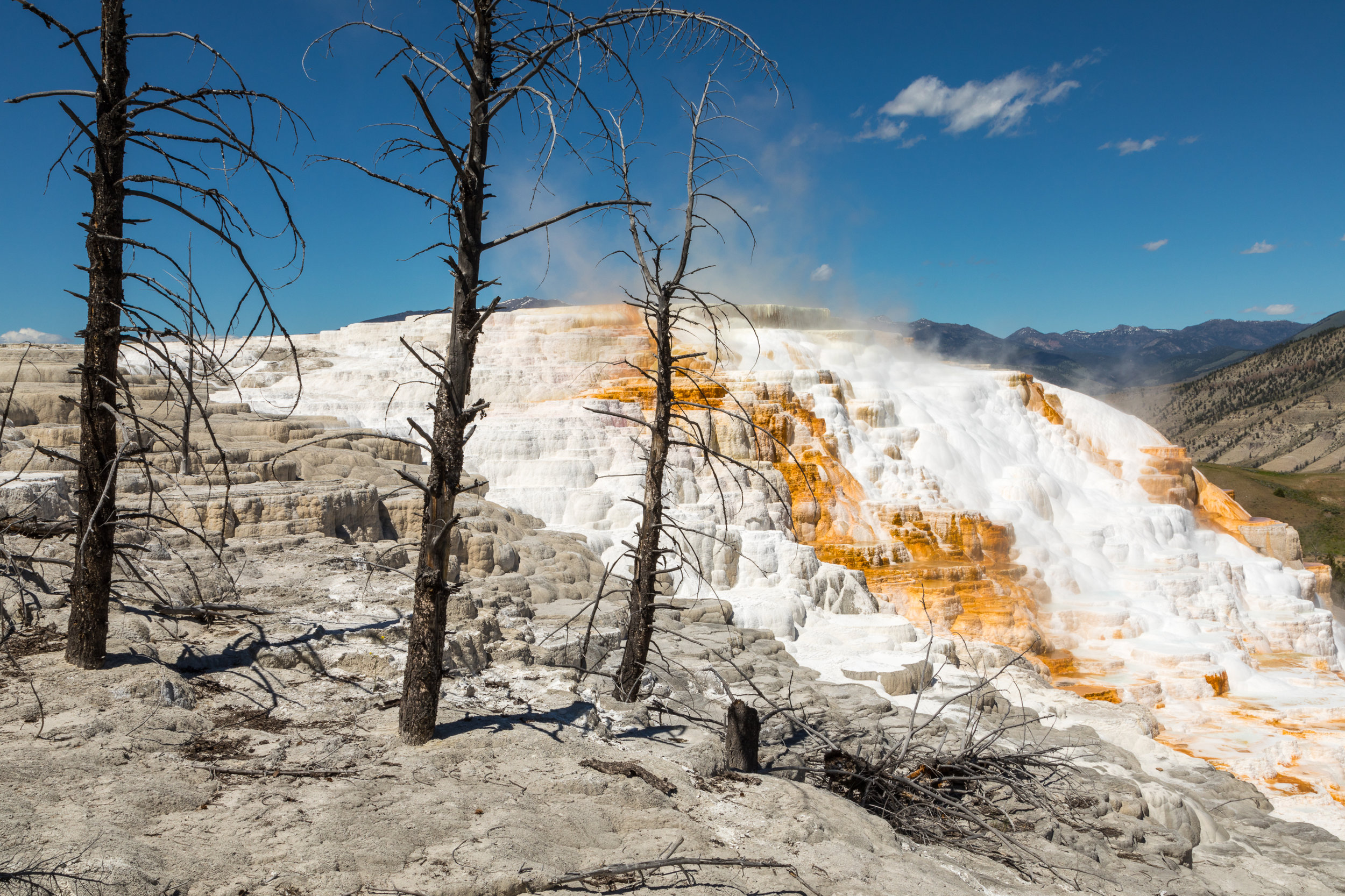 Mammoth Hot Springs, Yellowstone National Park, Image # 7419