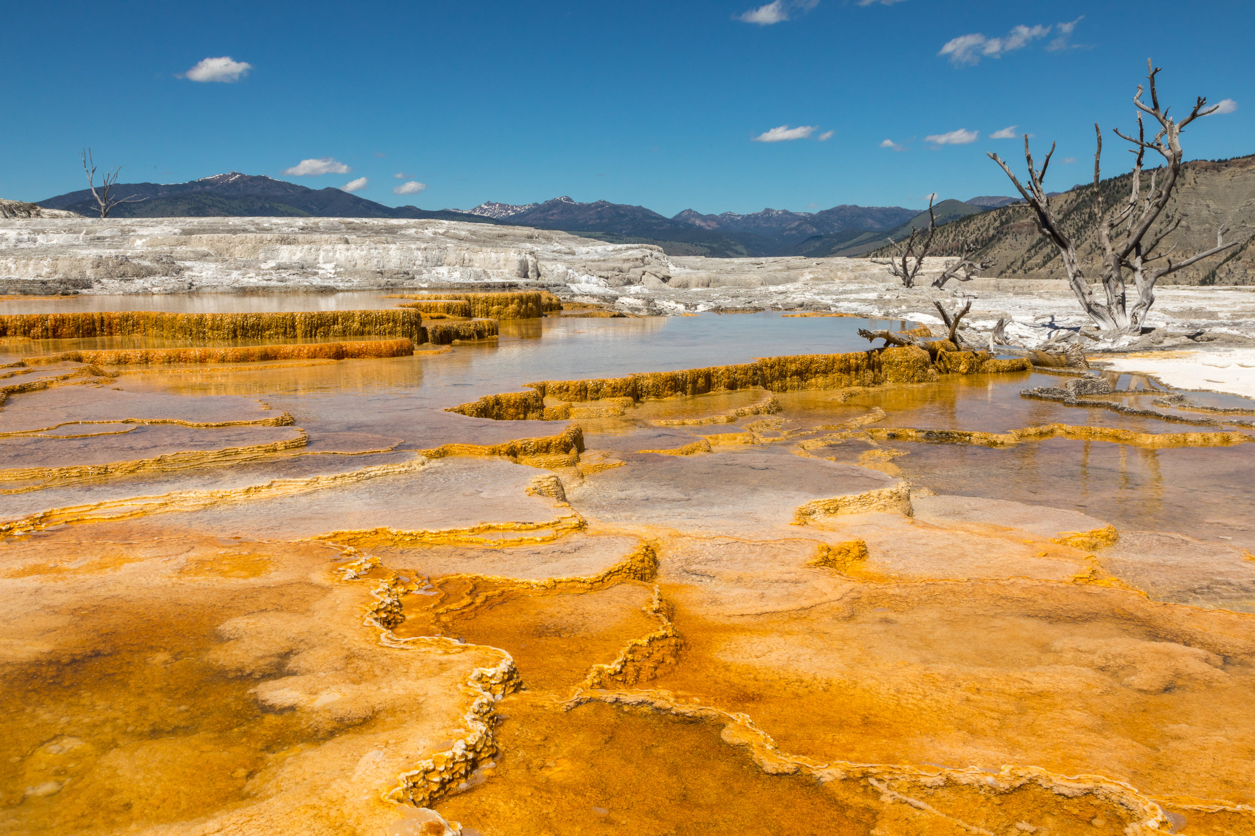 Mammoth Hot Springs, Yellowstone National Park, Image # 7431