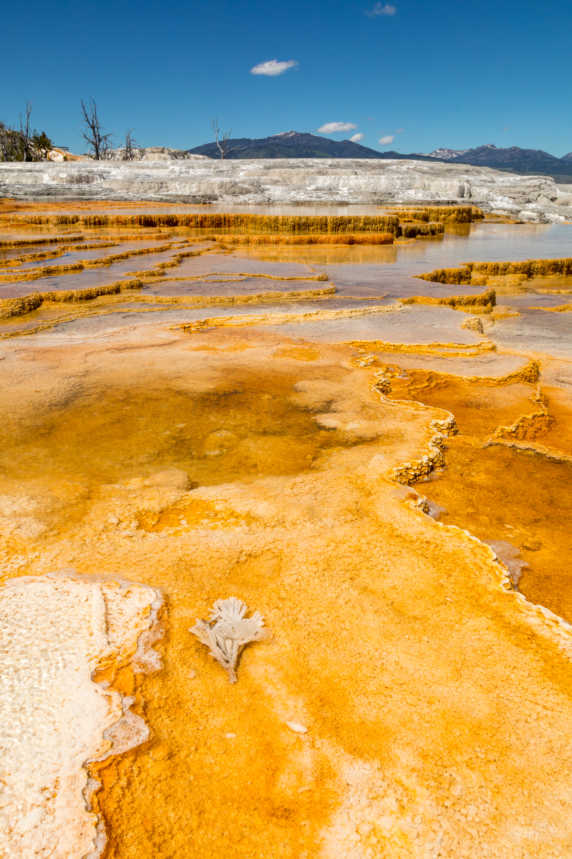 Mammoth Hot Springs, Yellowstone National Park, Image # 7518