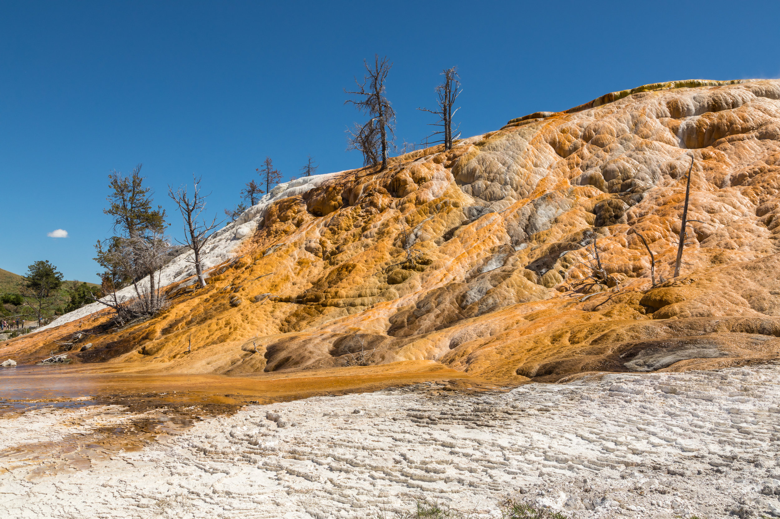 Mammoth Hot Springs, Yellowstone National Park, Image # 7544