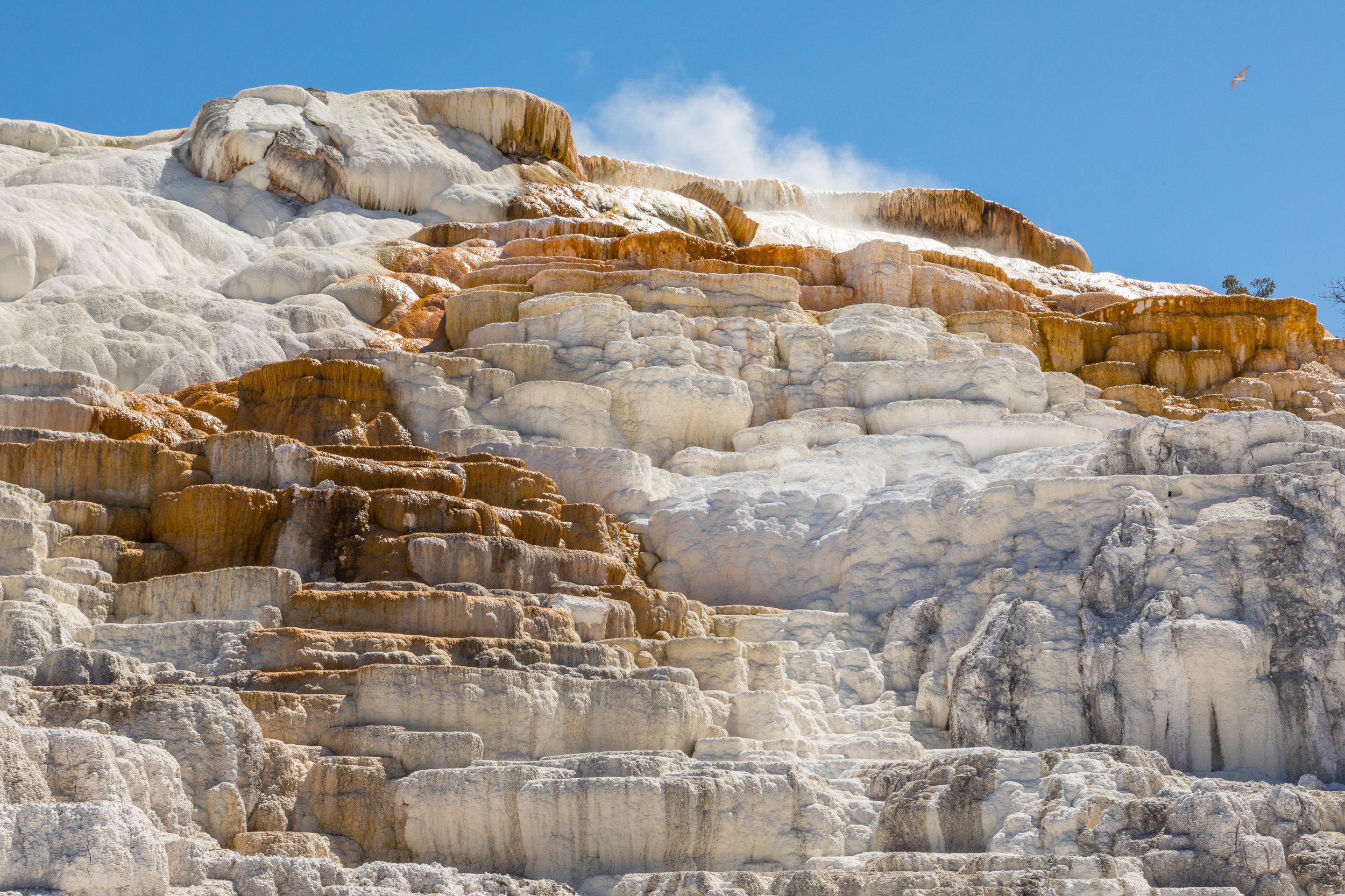 Mammoth Hot Springs, Yellowstone National Park, Image # 7556