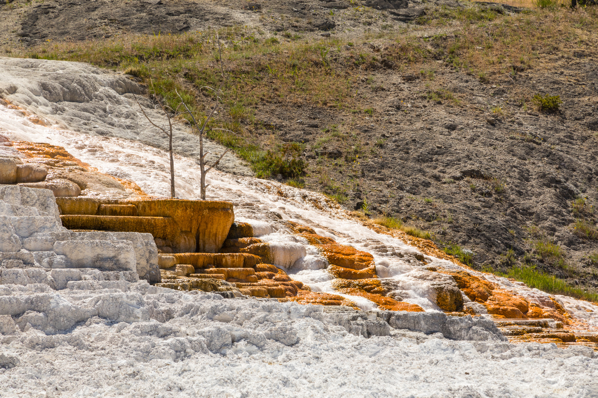 Mammoth Hot Springs, Yellowstone National Park, Image # 7568