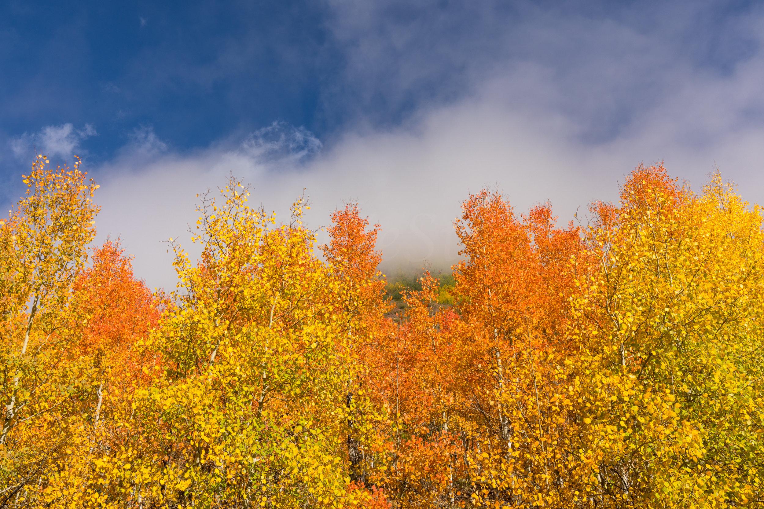 Silverton, Colorado, Image # 0775