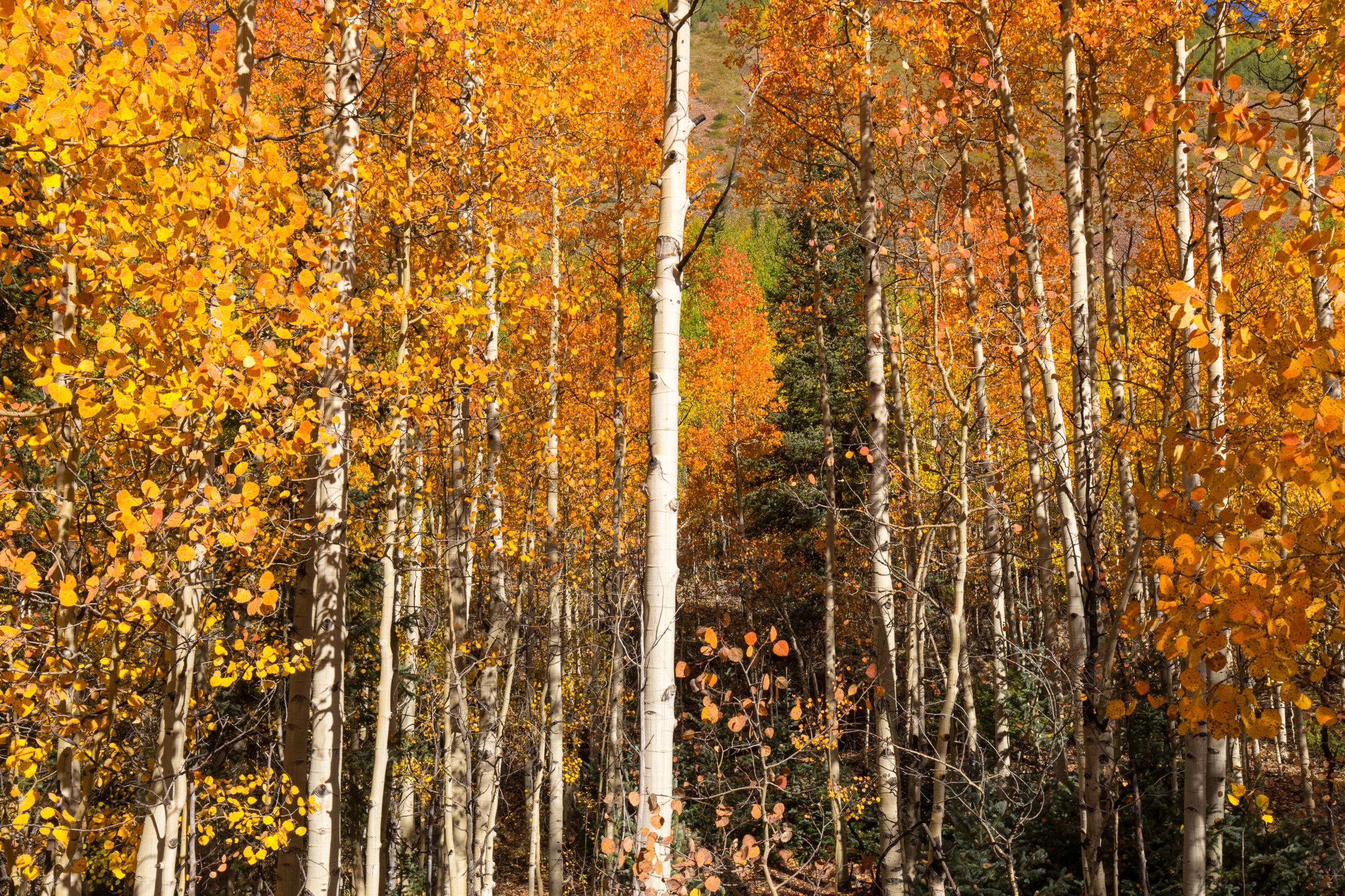 Silverton, Colorado, Image # 0836