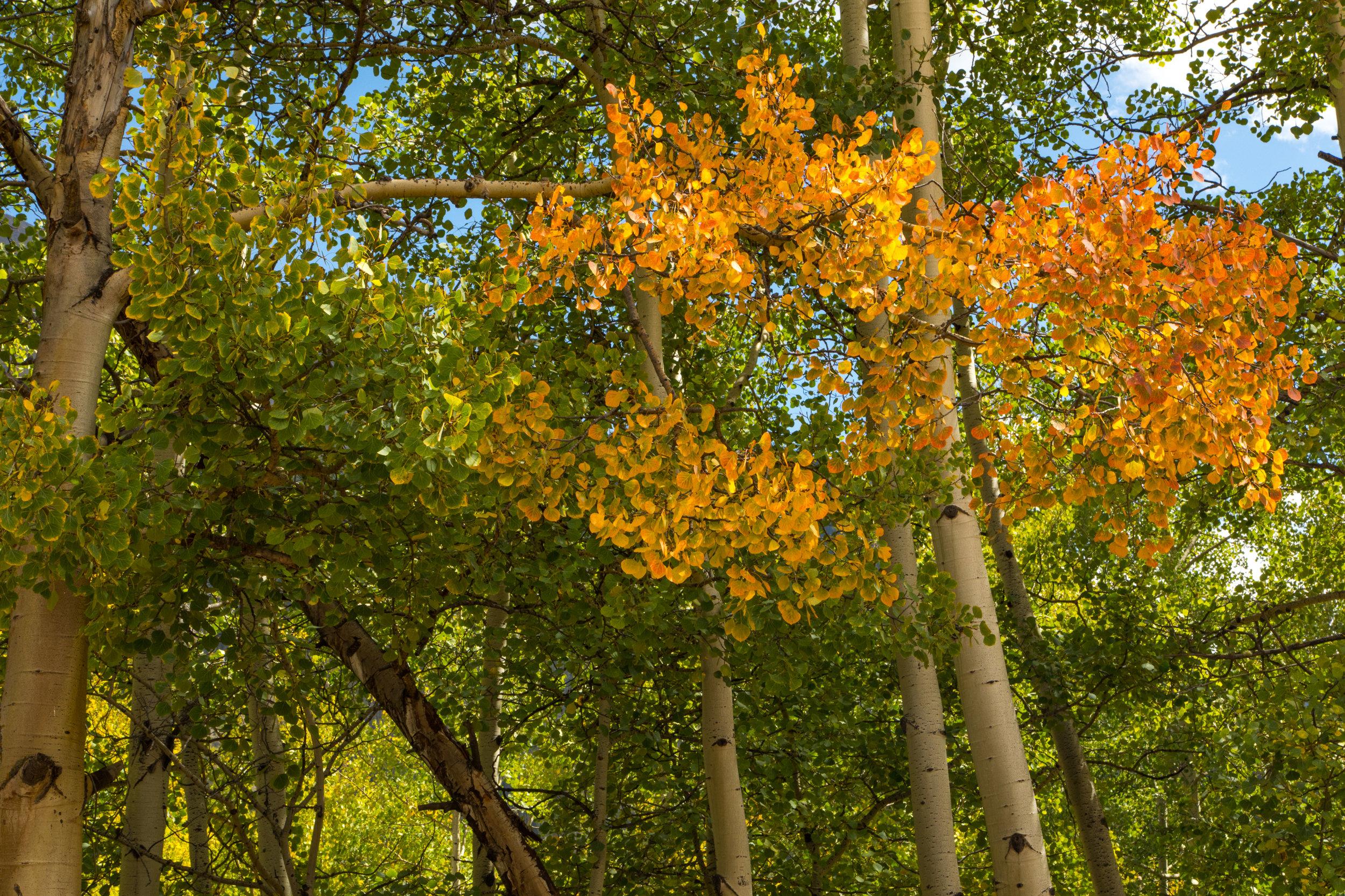 Silverton, Colorado, Image # 0914