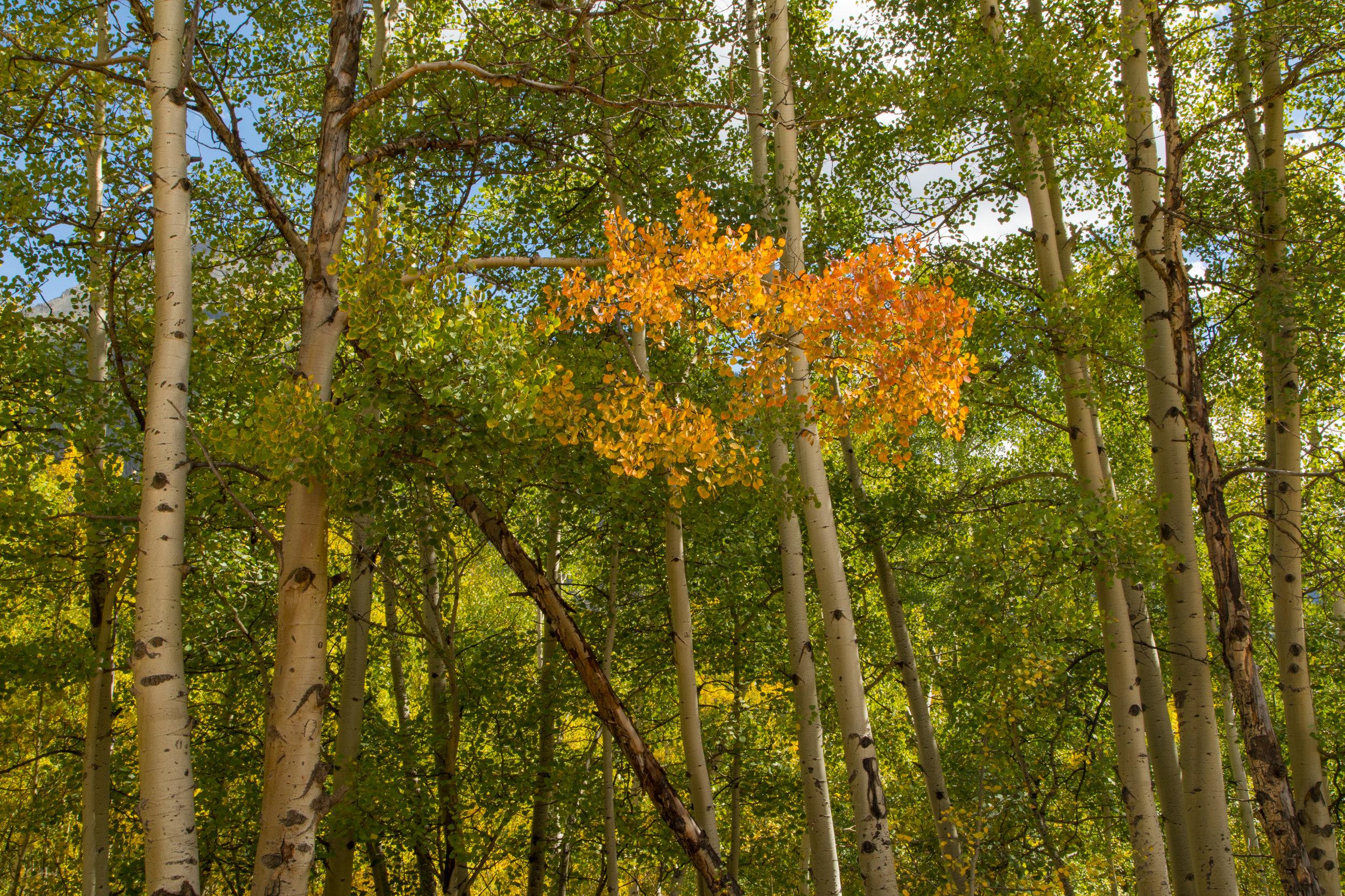 Silverton, Colorado, Image # 1062