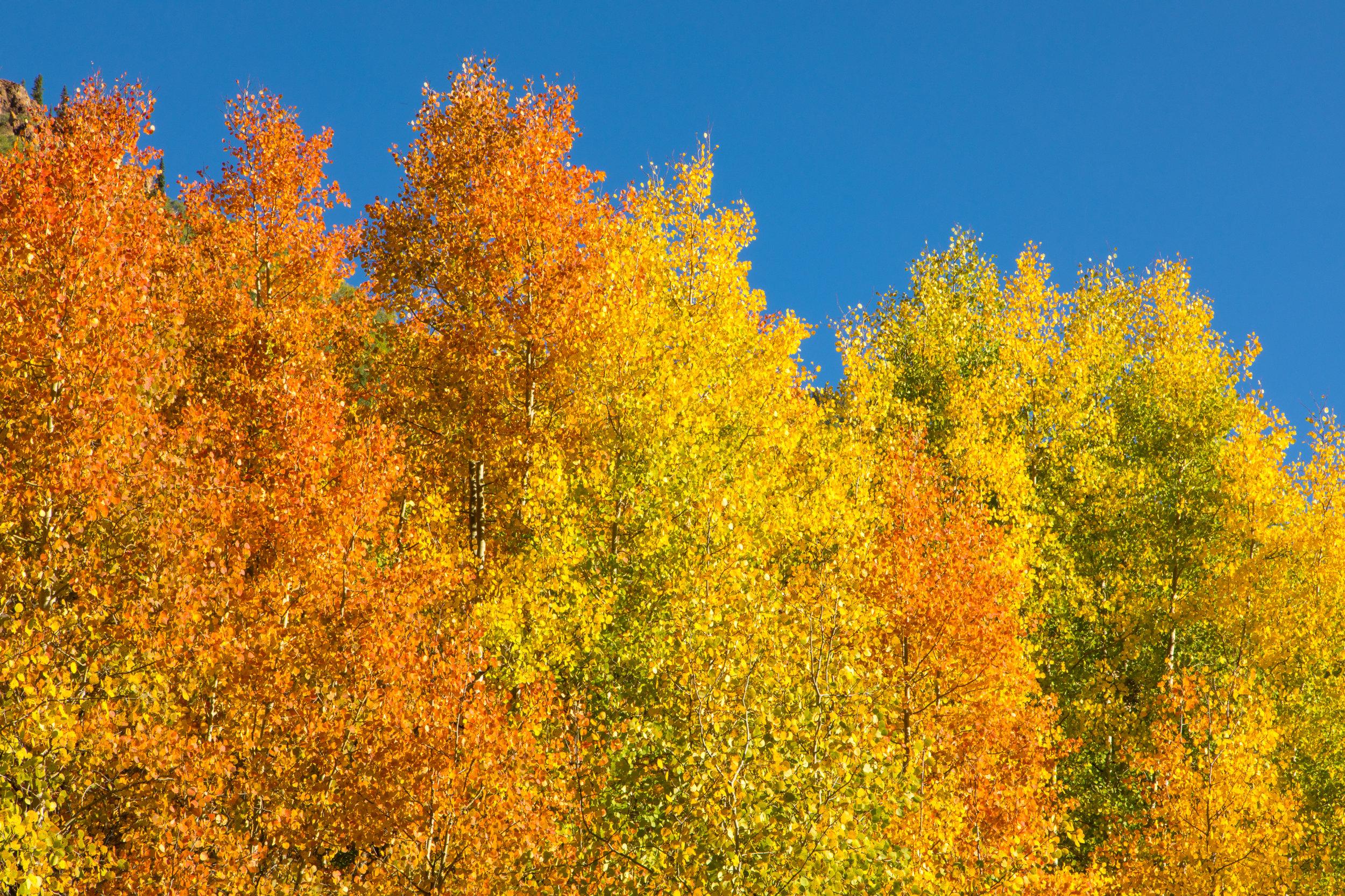 Silverton, Colorado, Image # 9210