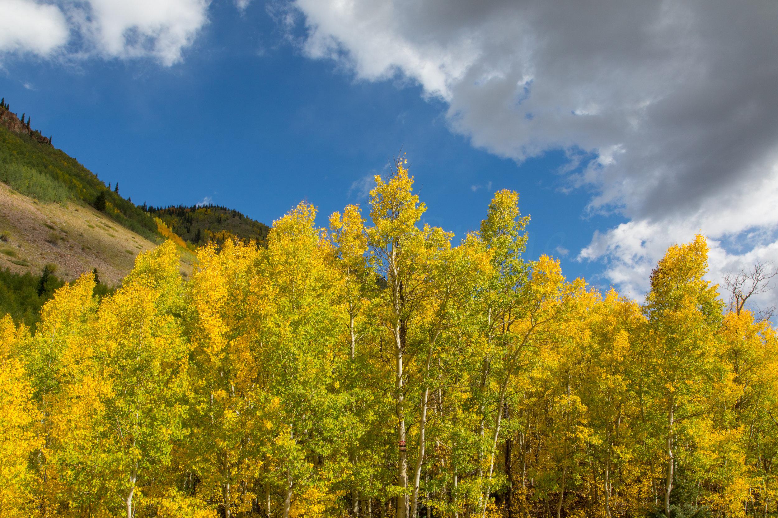 Silverton, Colorado, Image # 9708