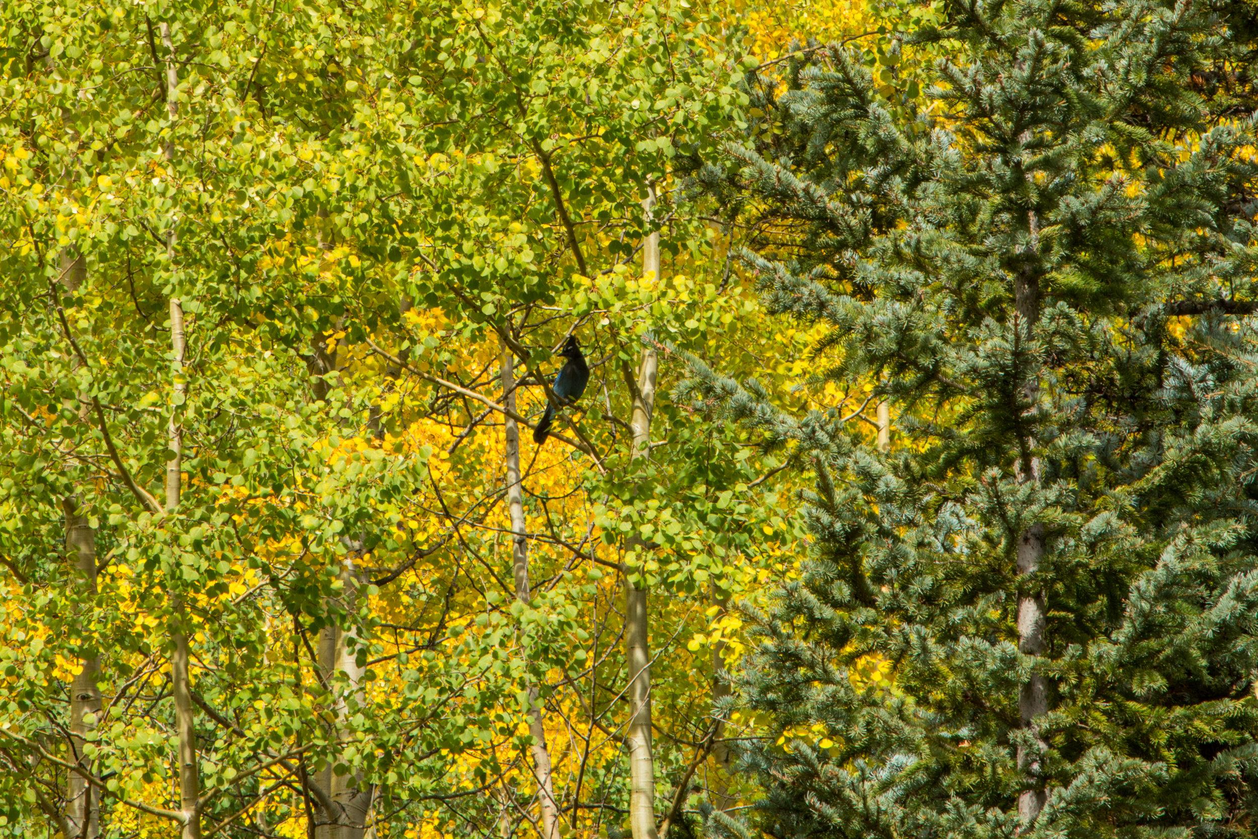 Silverton, Colorado, Image # 9909