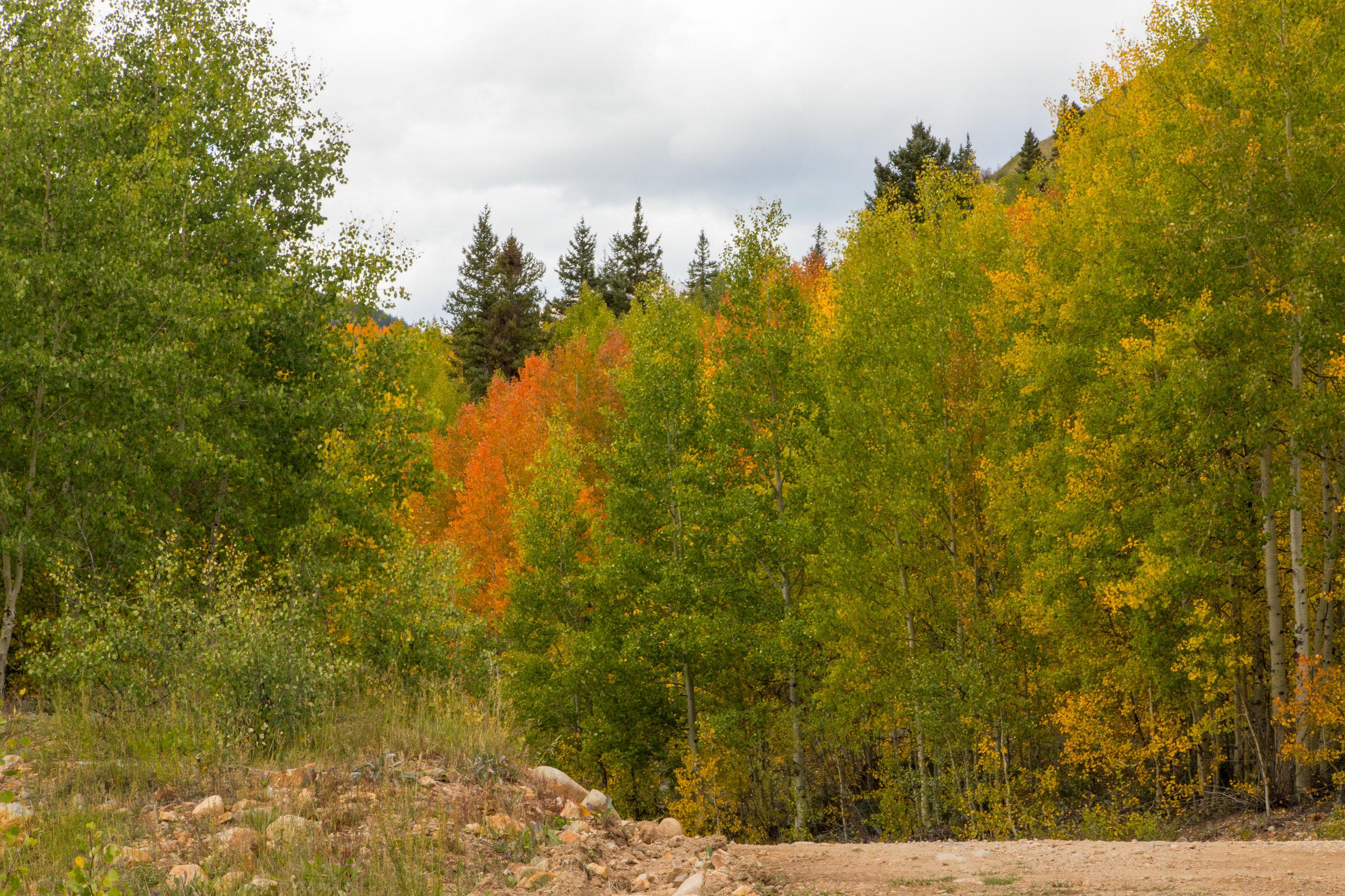 Silverton, Colorado, Image # 9974