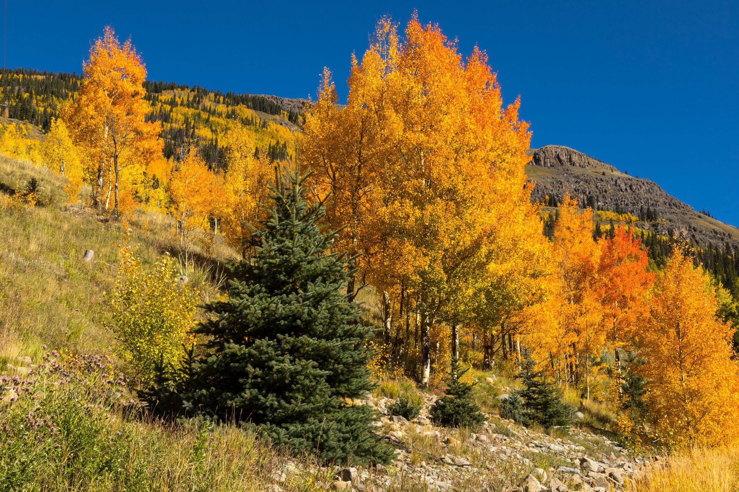 Silverton, Colorado, Image #3310