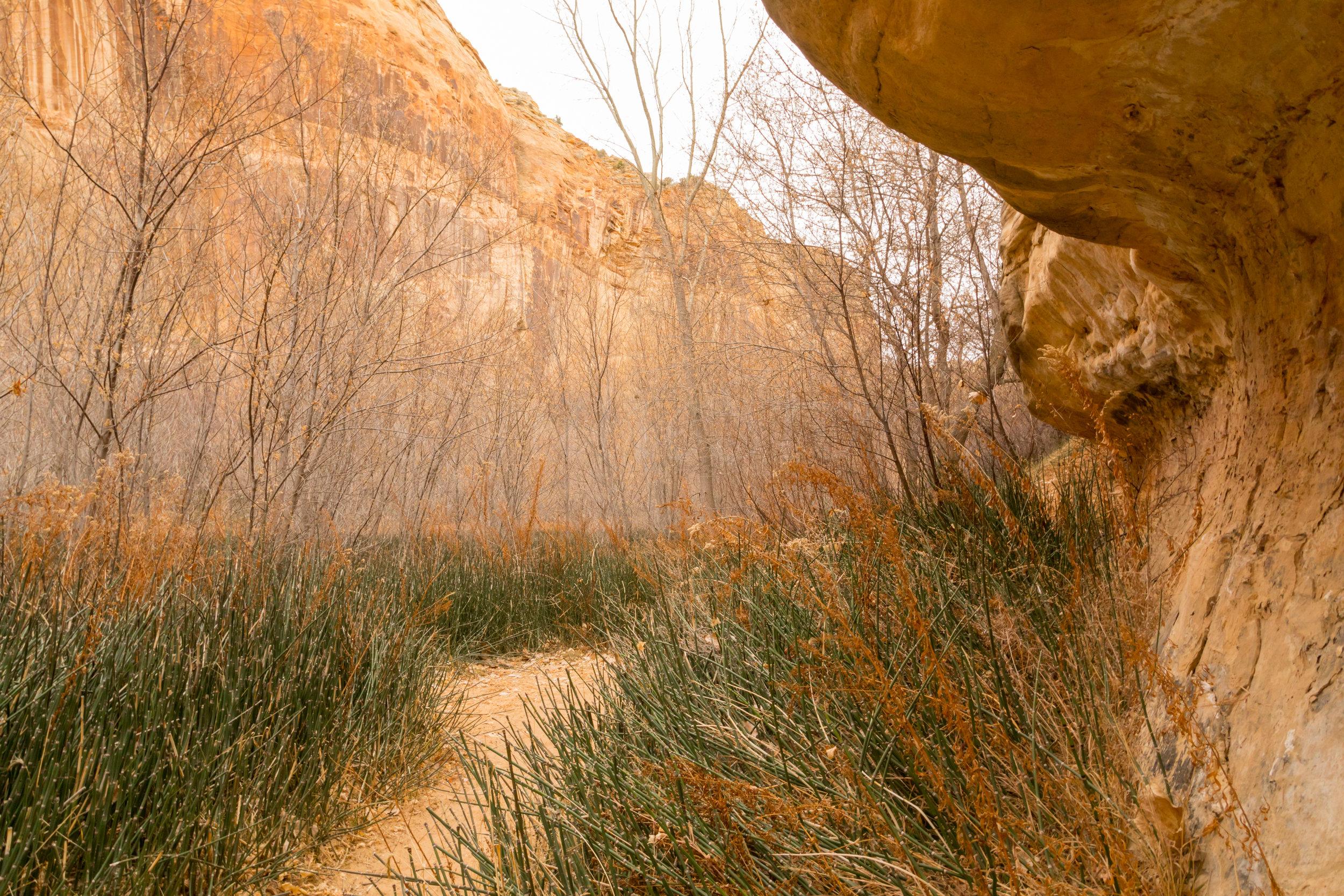 Lower Calf Creek Falls, Image # 3845