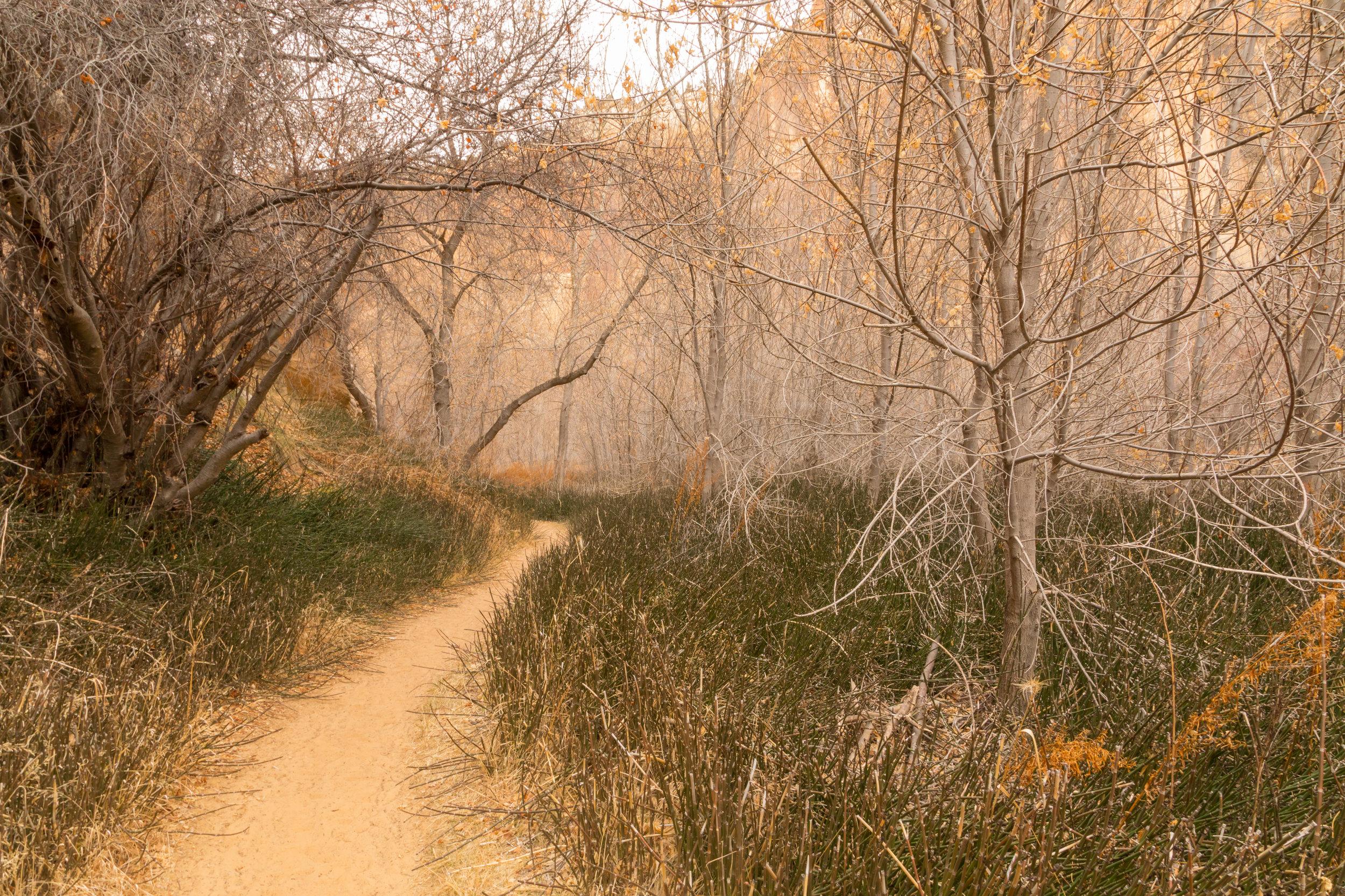 Lower Calf Creek Falls, Image # 3849