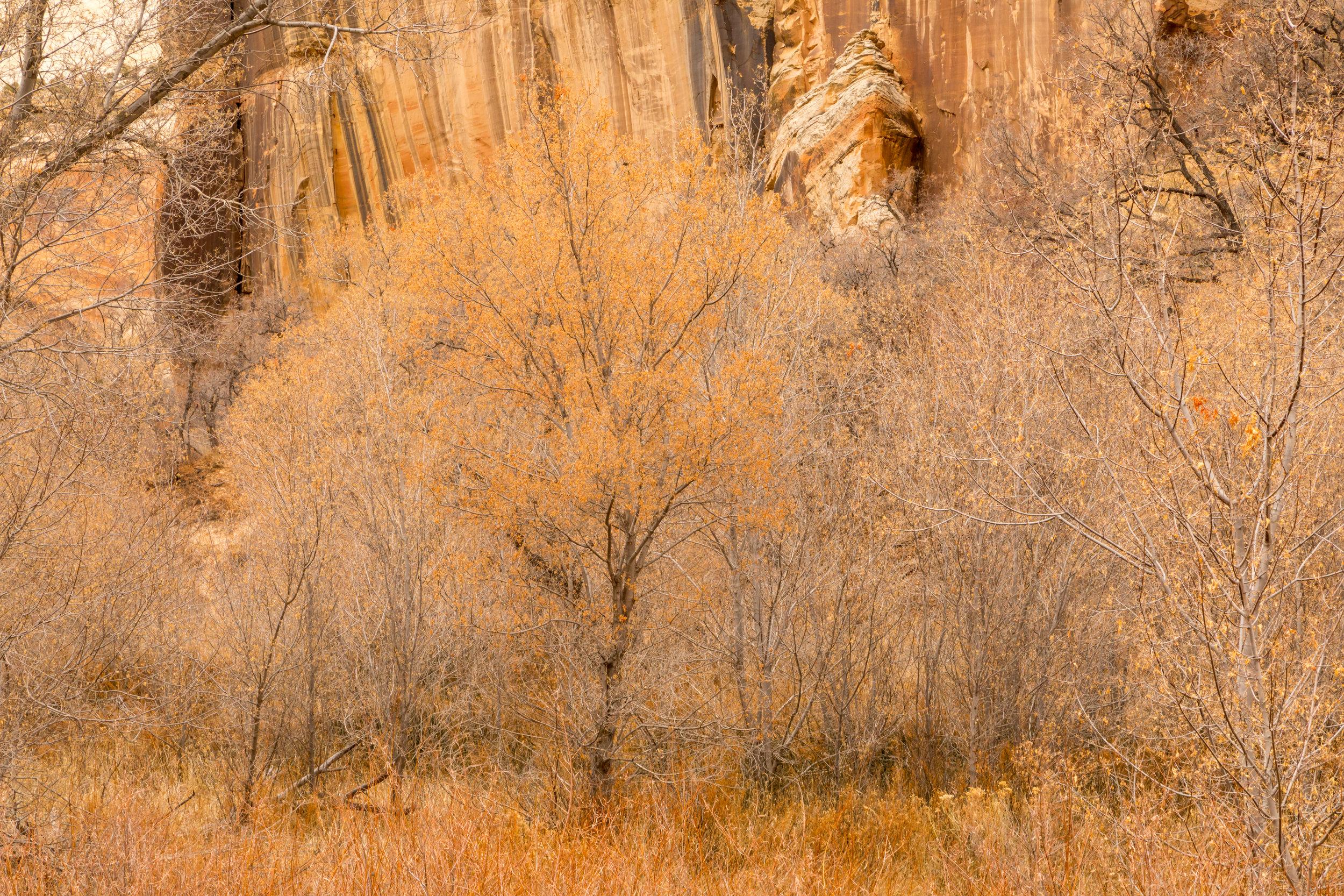 Lower Calf Creek Falls, Image # 3950