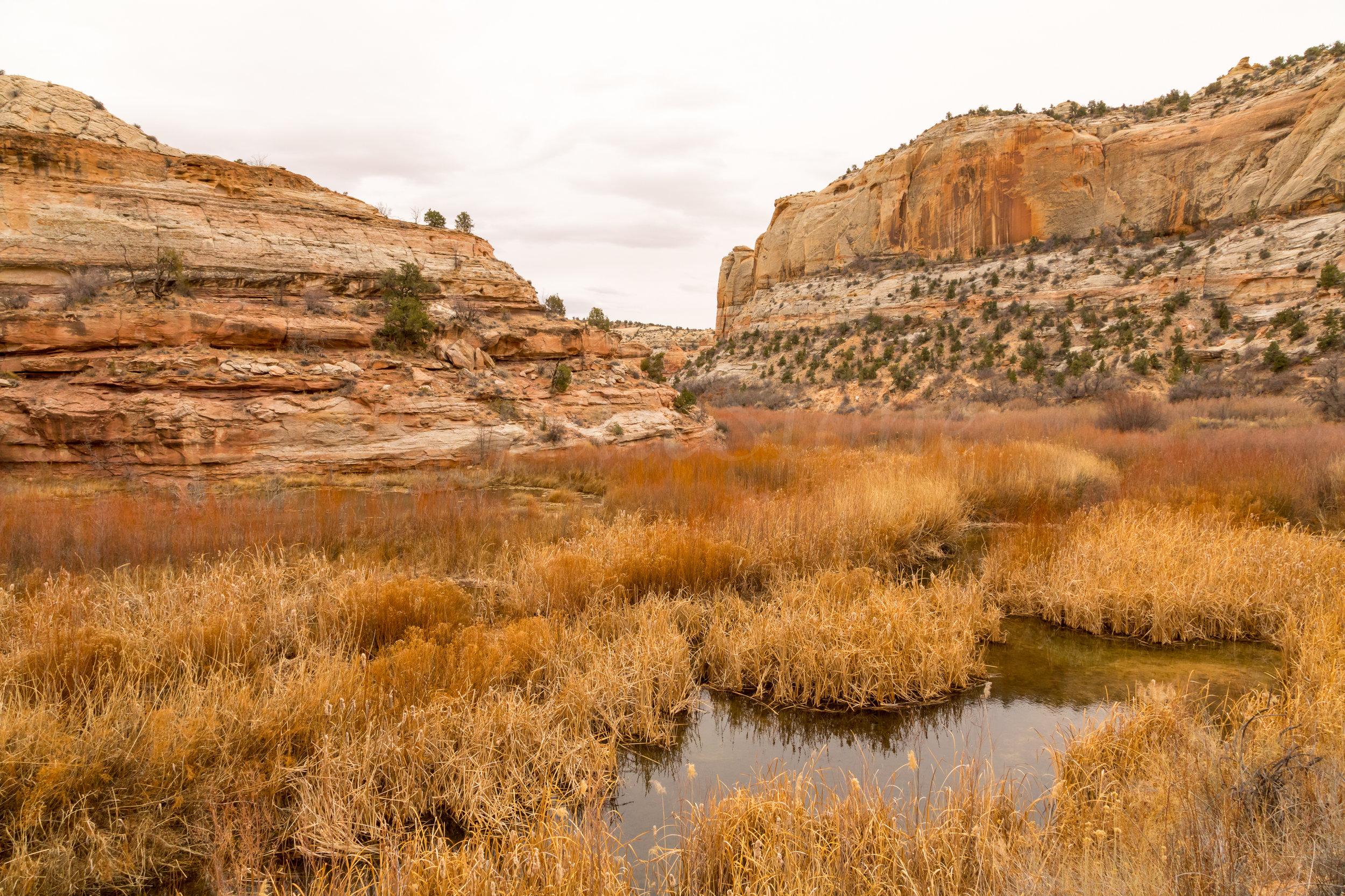 Lower Calf Creek Falls, Image # 4051