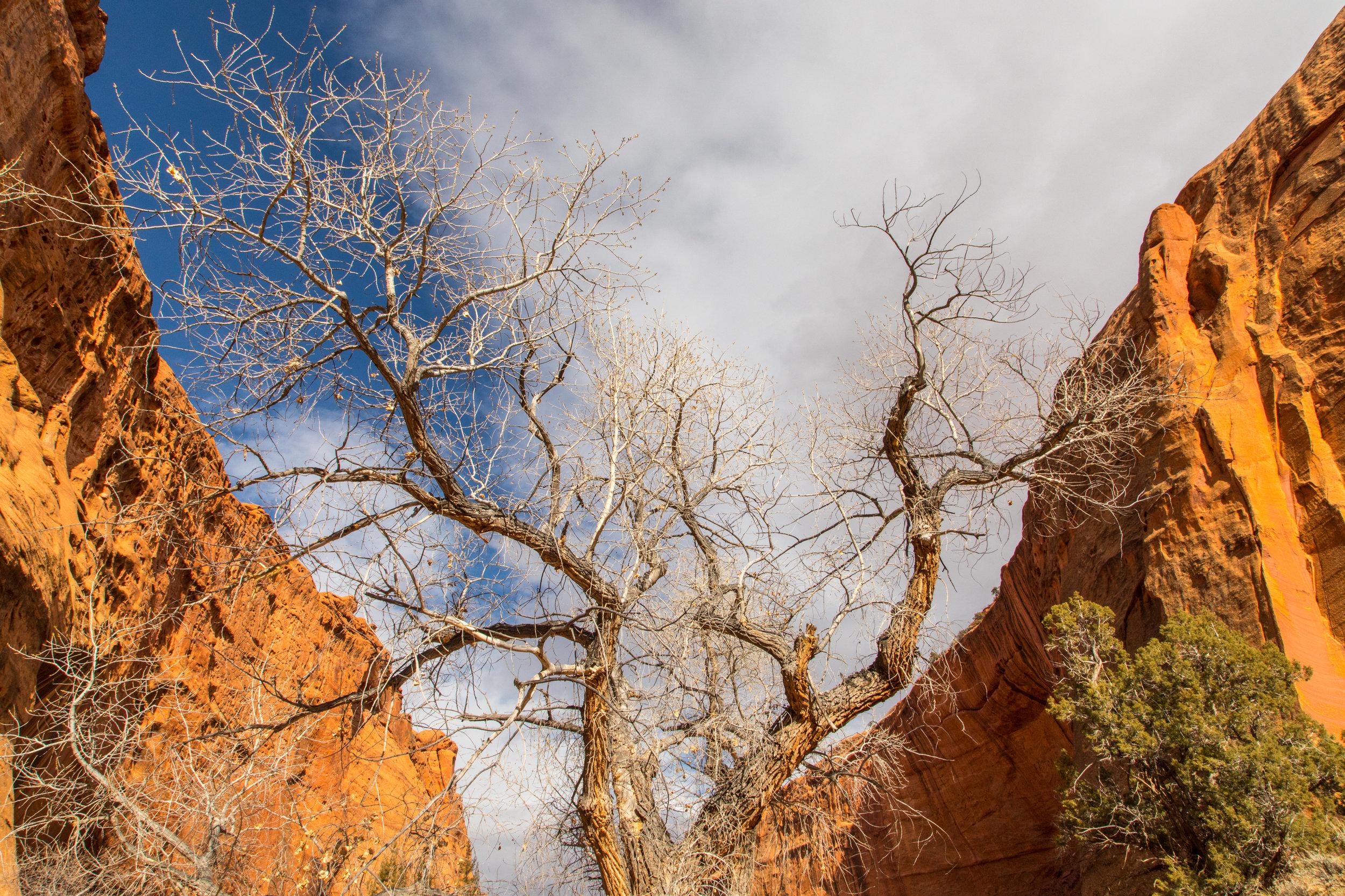 Burr Trail, Image # 4105
