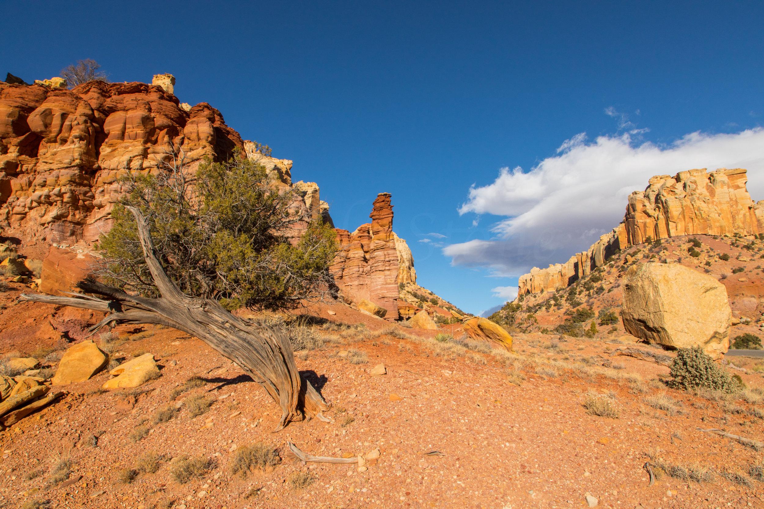 Burr Trail, Image # 4368