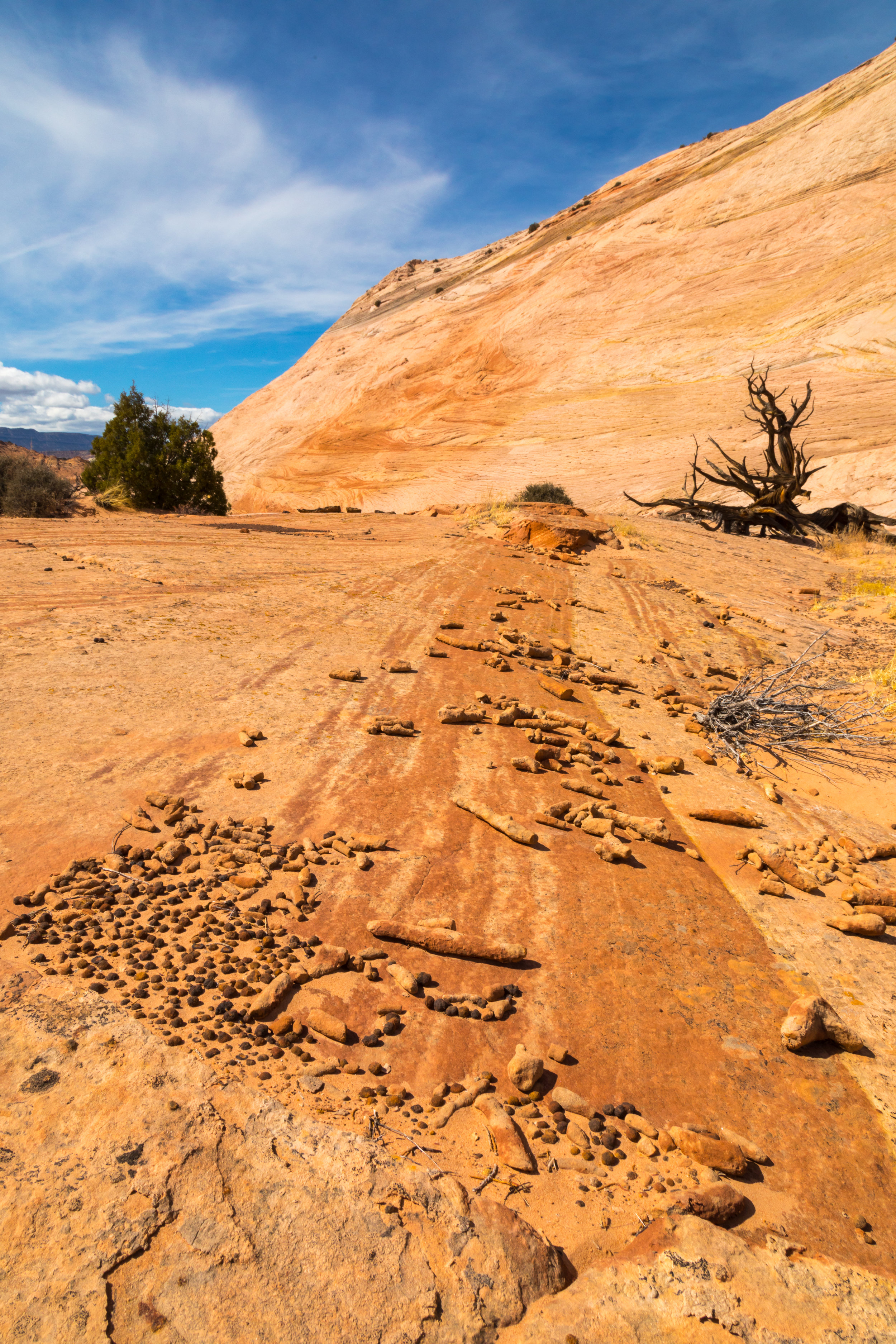 Escalante National Monument, Image # 6141