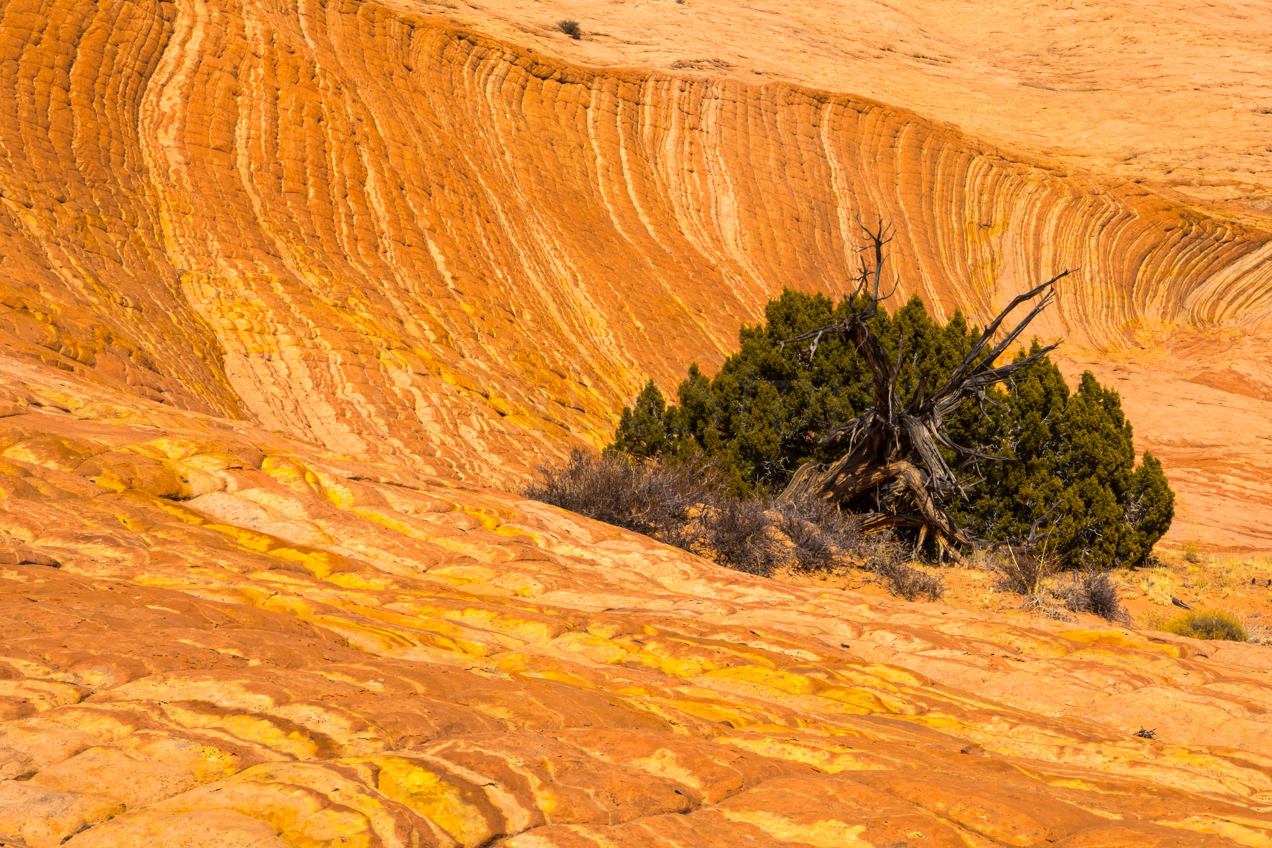 Escalante National Monument, Image # 6304