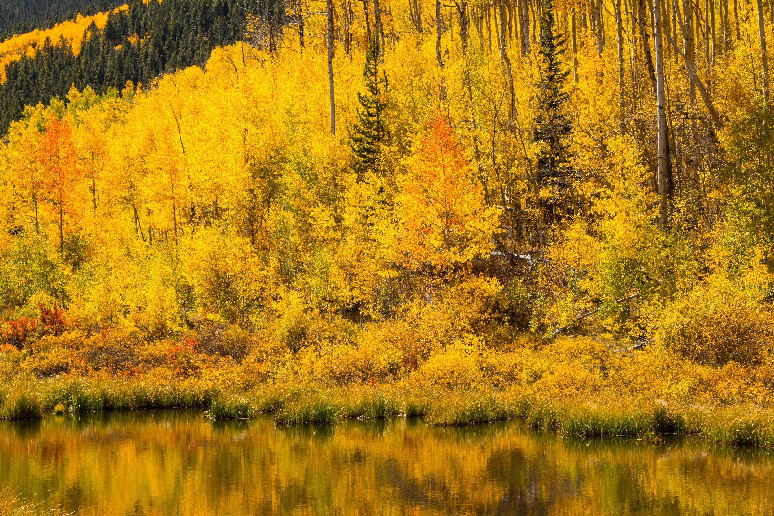 Twin Lakes, Image # 1033