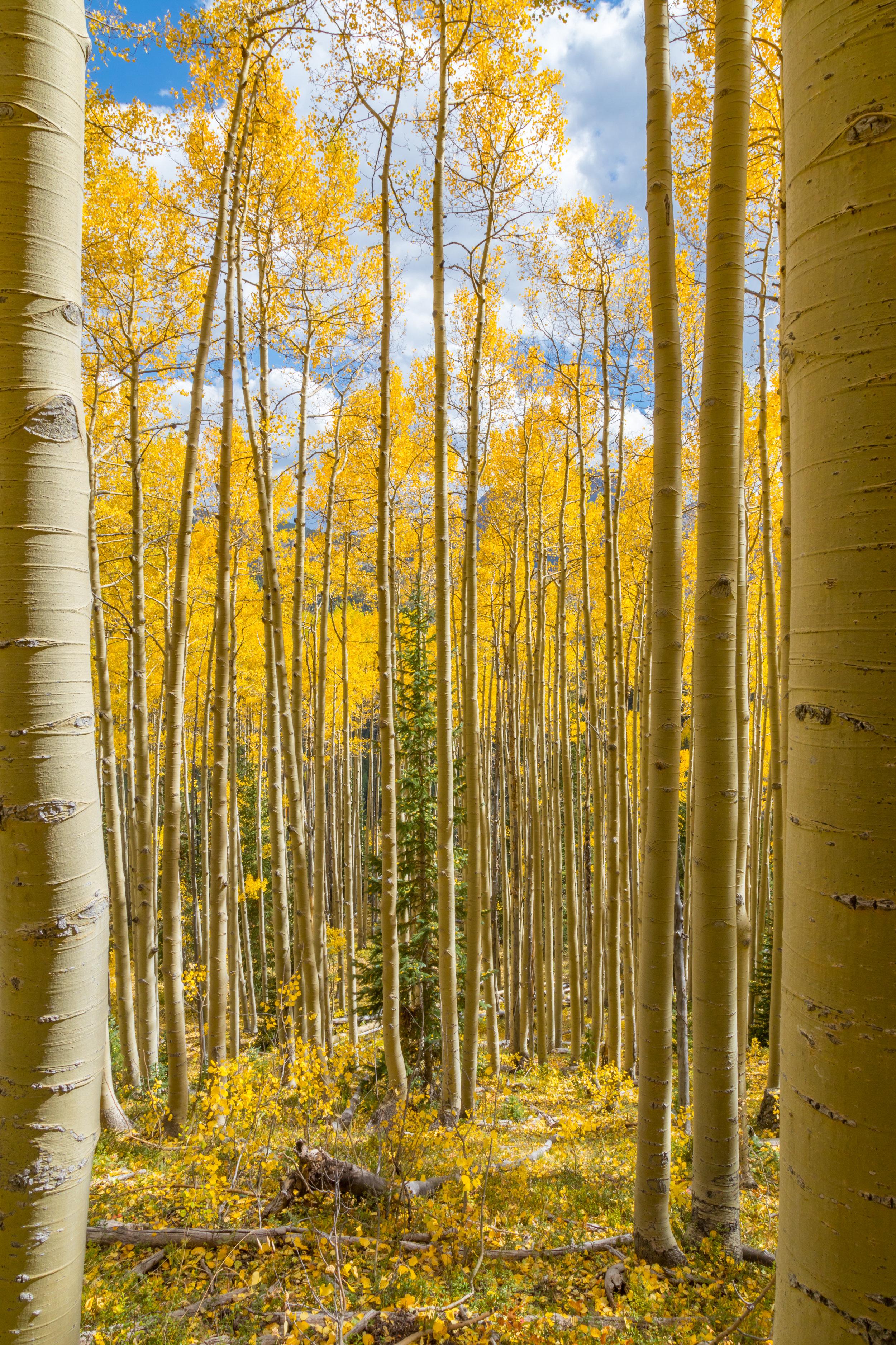 Deer Creek, Image # 4742