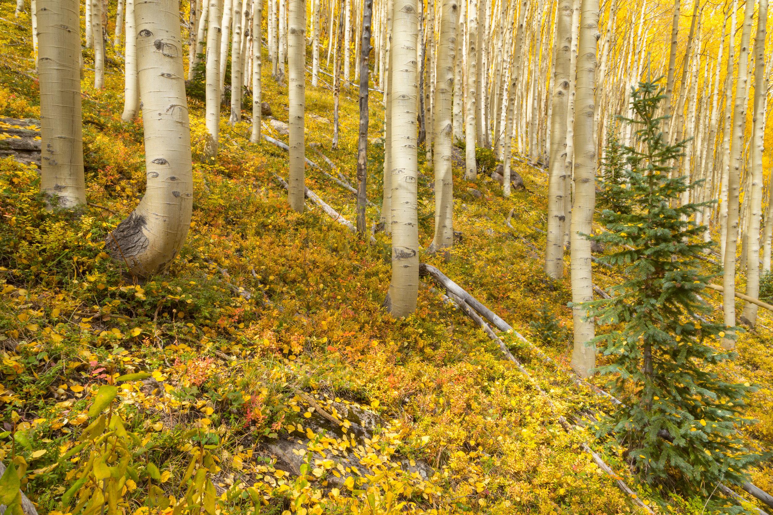 Deer Creek, Image # 4089
